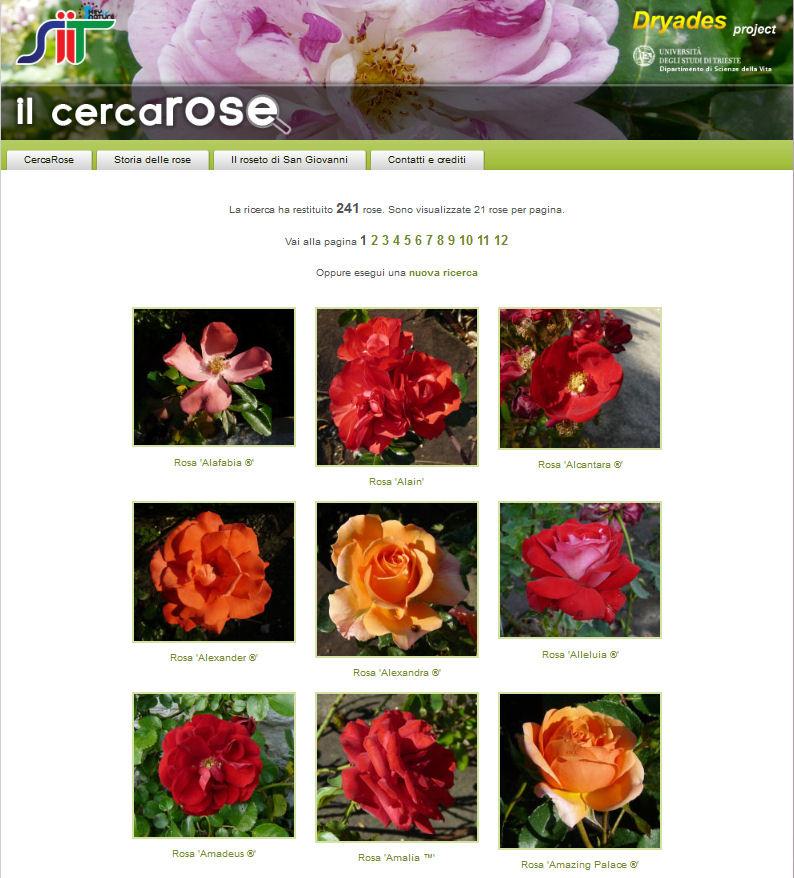Il nuovo cercarose 2000 rose dal roseto di san giovanni for Nomi dei gemelli diversi