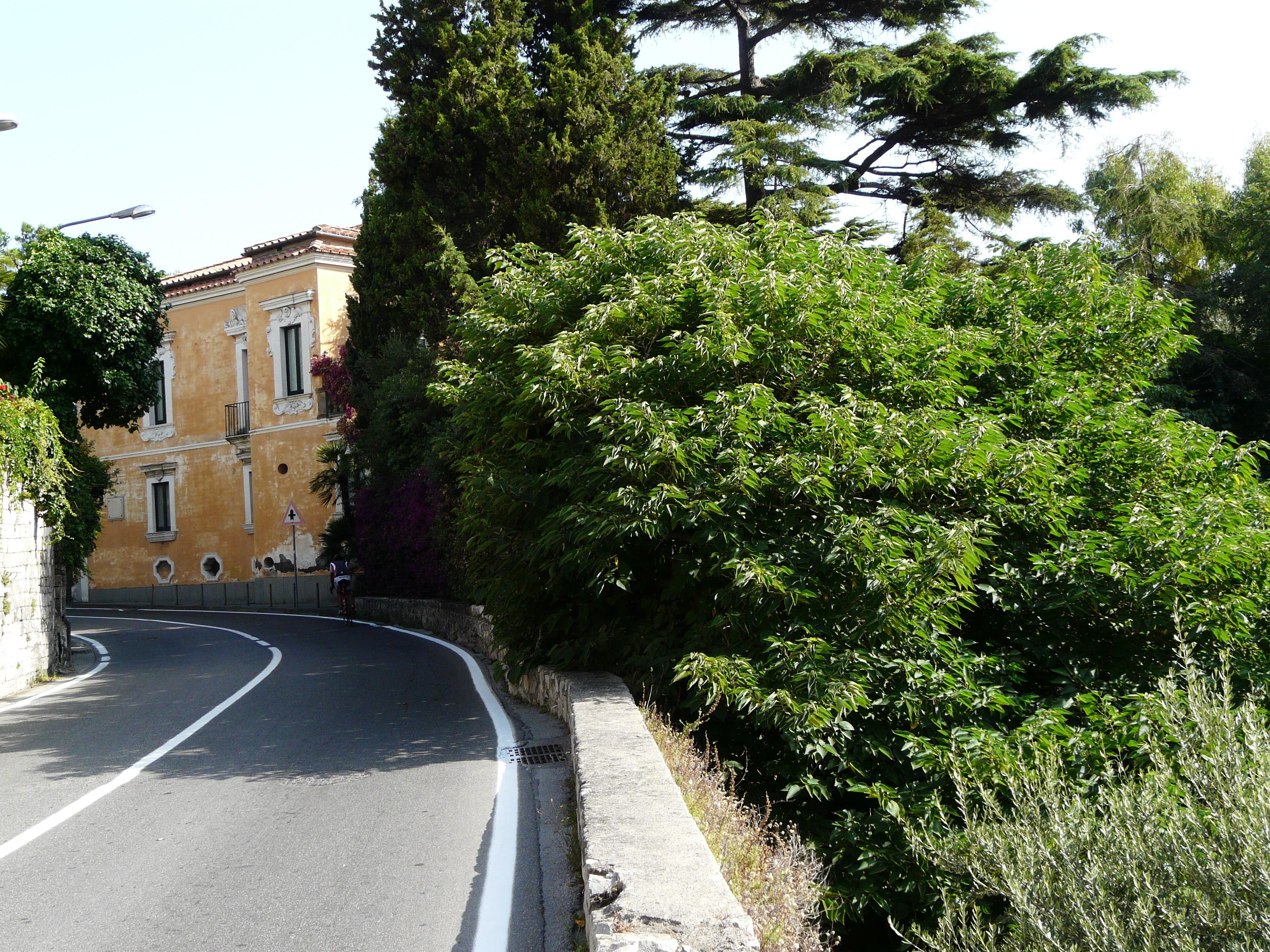 © Dipartimento di Scienze della Vita, Università di Trieste<br>by Andrea Moro<br>Comune di Sorrento, localià Capo di Sorrento, NA, Campania, Italia, 14/07/2011<br>Distributed under CC-BY-SA 4.0 license.