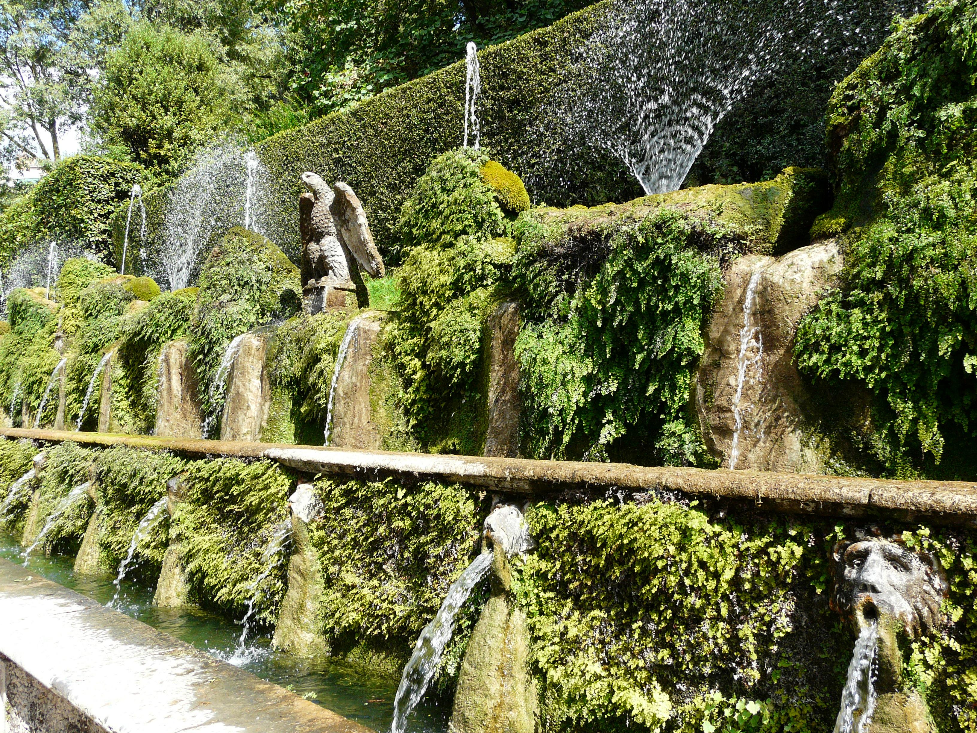 © Dipartimento di Scienze della Vita, Università di Trieste<br>by Andrea Moro<br>Comune di Tivoli, Giardini della Villa D'Este, RO, Lazio, Italia, 16/07/2011<br>Distributed under CC-BY-SA 4.0 license.