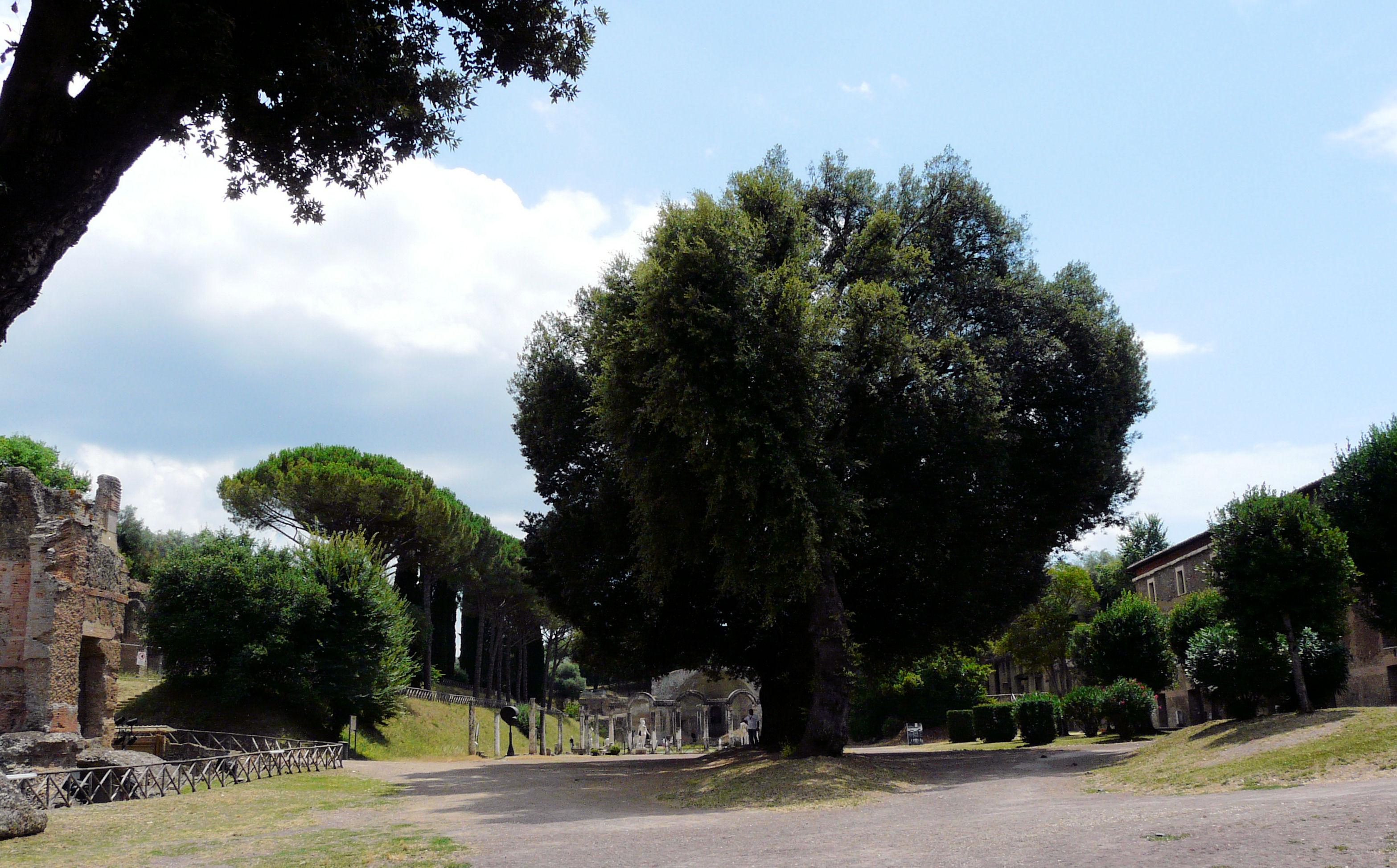 © Dipartimento di Scienze della Vita, Università di Trieste<br>by Andrea Moro<br>Comune di Tivoli, Villa Adriana, RO, Lazio, Italia, 18/07/2011<br>Distributed under CC-BY-SA 4.0 license.
