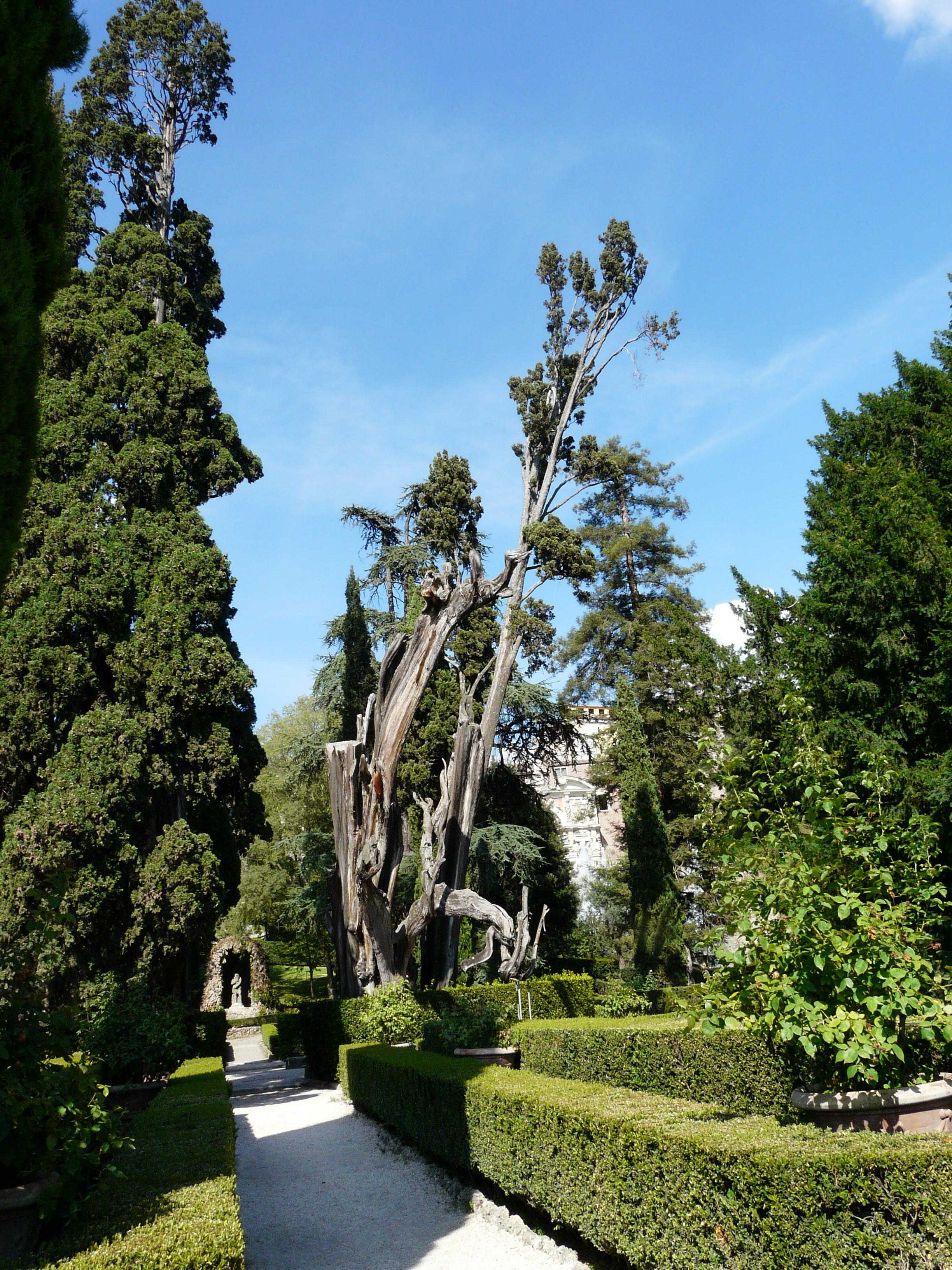 © Dipartimento di Scienze della Vita, Università di Trieste<br>by Andrea Moro<br>Comune di Tivoli, Giardino di Villa D'Este, RO, Lazio, Italia, 18/07/2011<br>Distributed under CC-BY-SA 4.0 license.