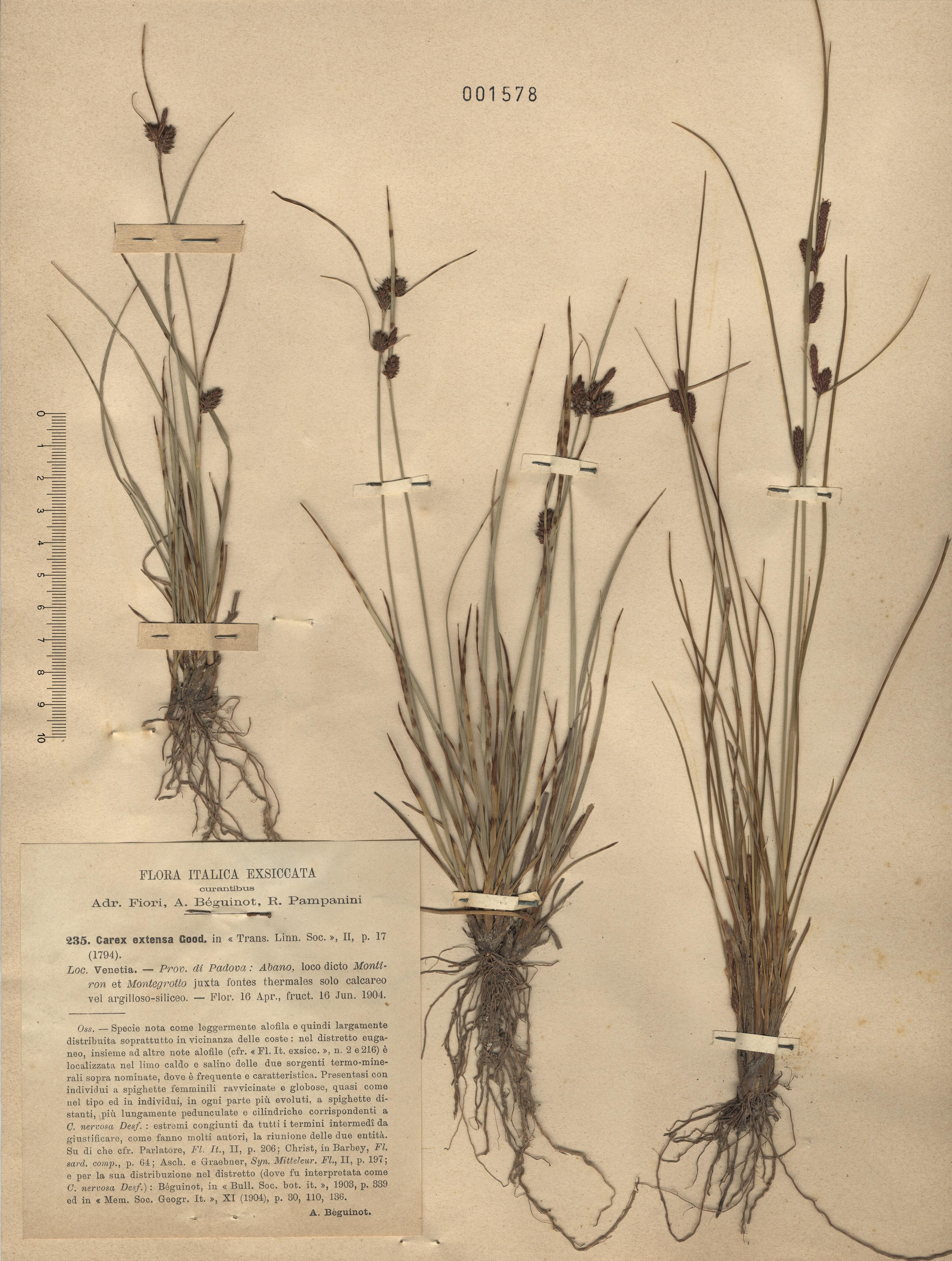 © Hortus Botanicus Catinensis - Herb. sheet 001578<br>