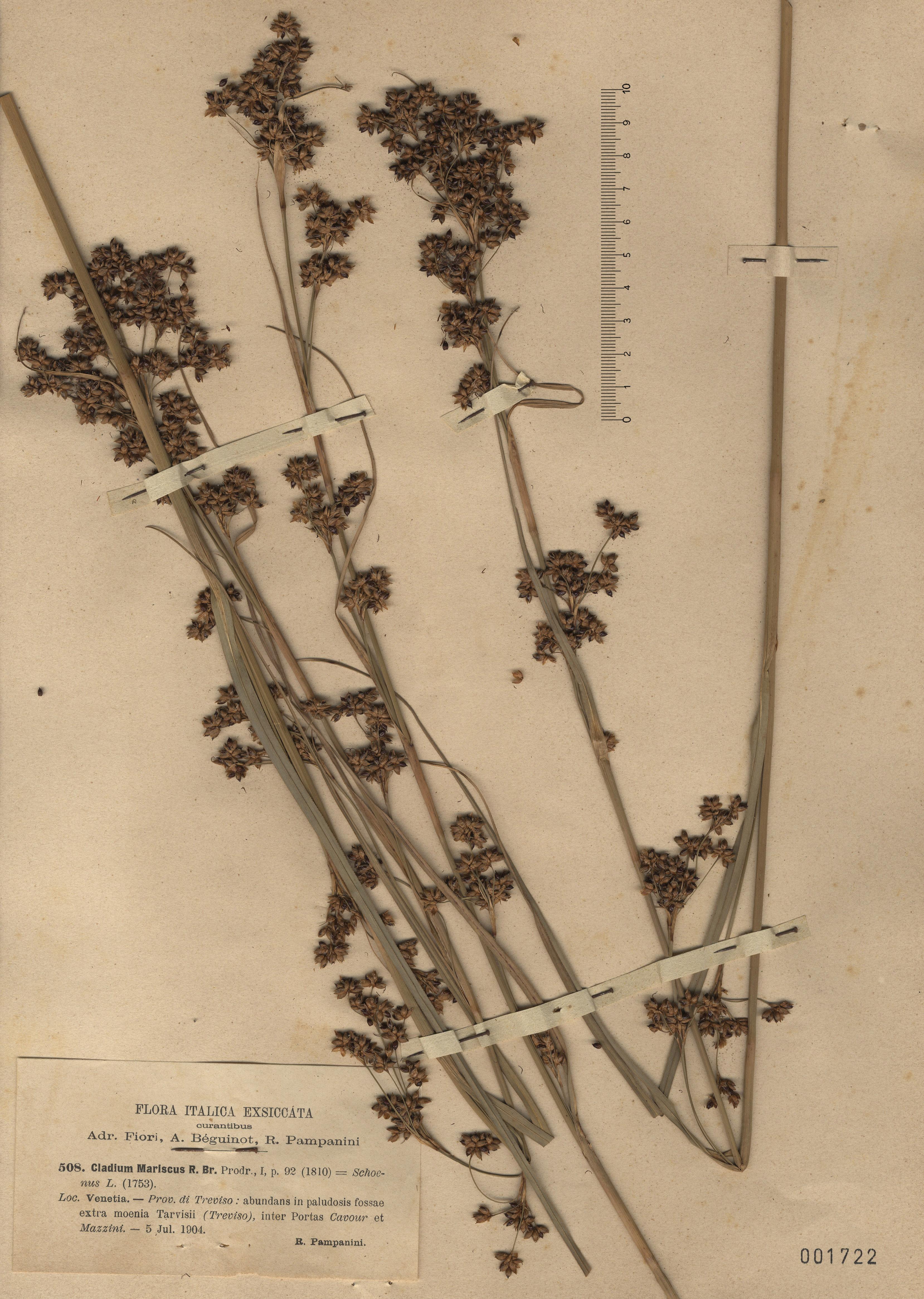 © Hortus Botanicus Catinensis - Herb. sheet 001722<br>
