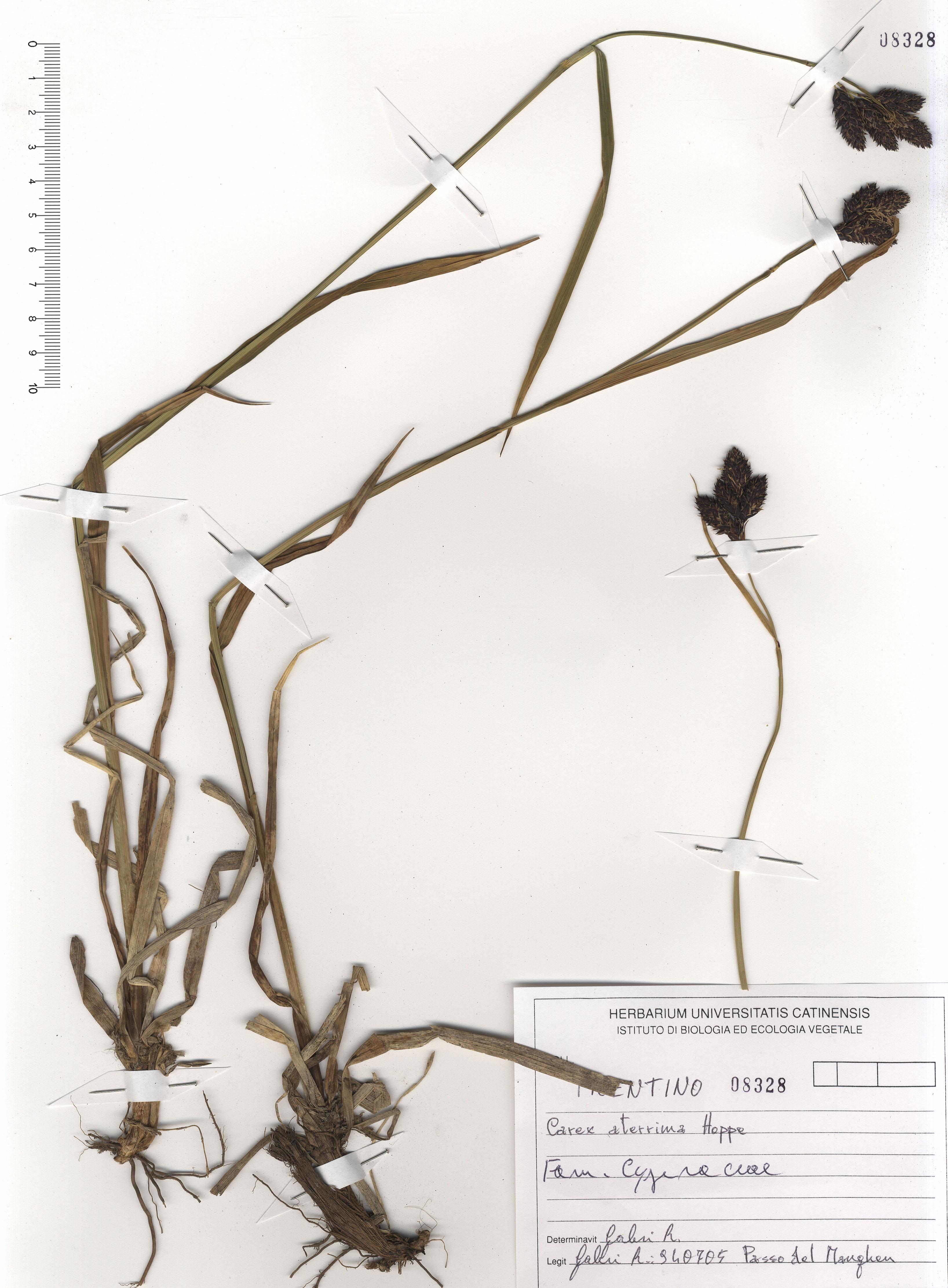 © Hortus Botanicus Catinensis - Herb. sheet 108328<br>