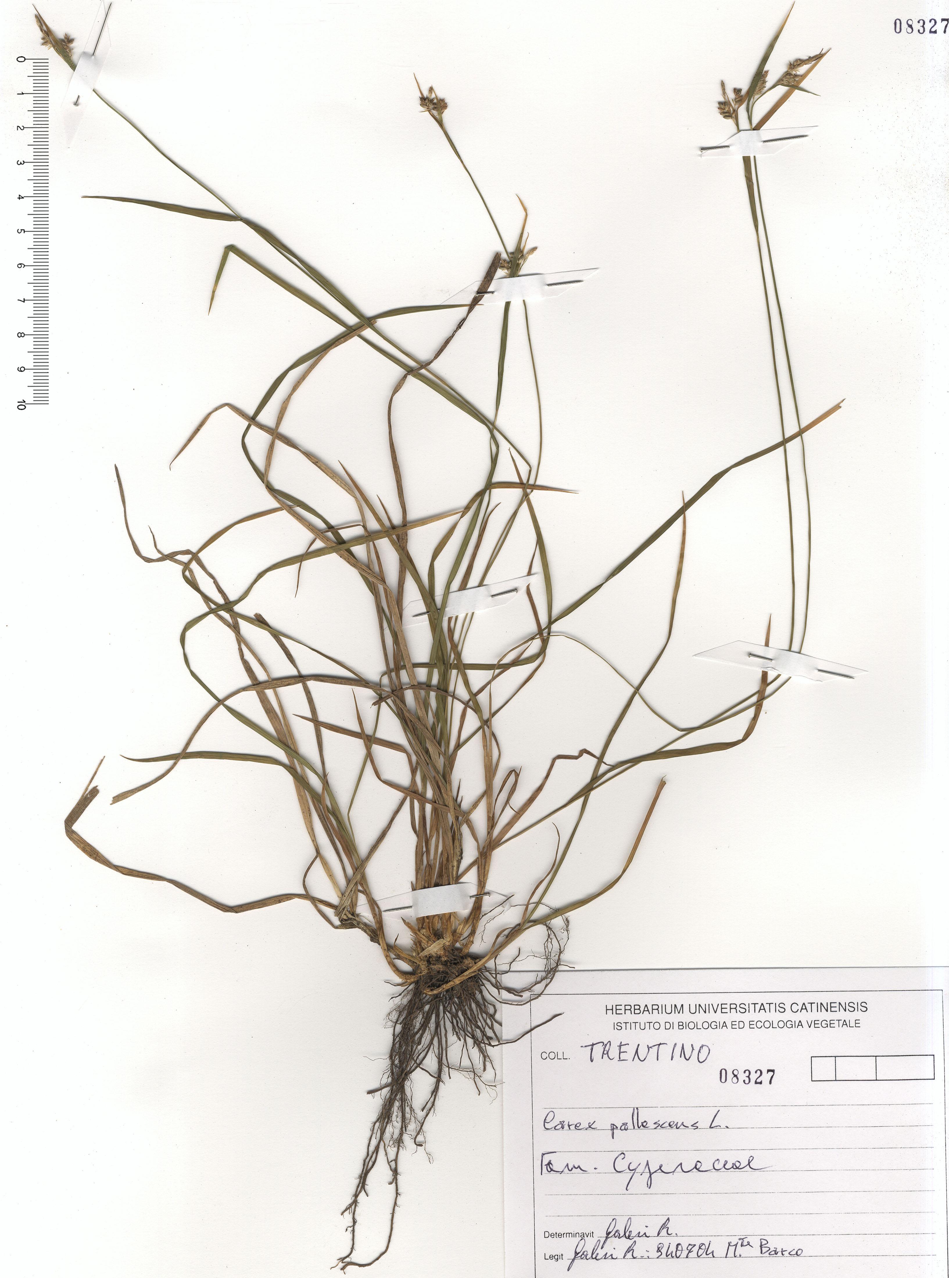 © Hortus Botanicus Catinensis - Herb. sheet 108327<br>