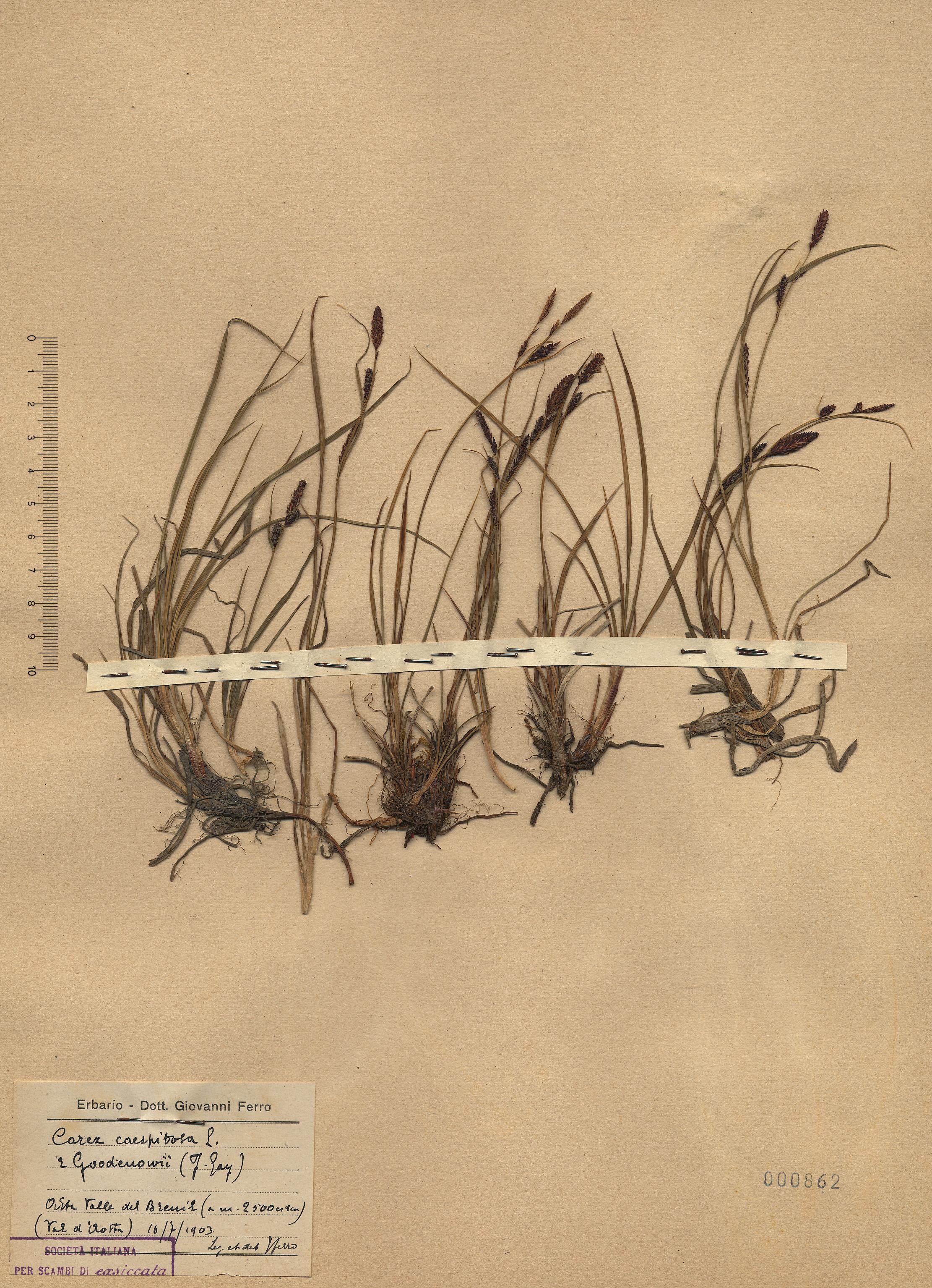 © Hortus Botanicus Catinensis - Herb. sheet 000862<br>