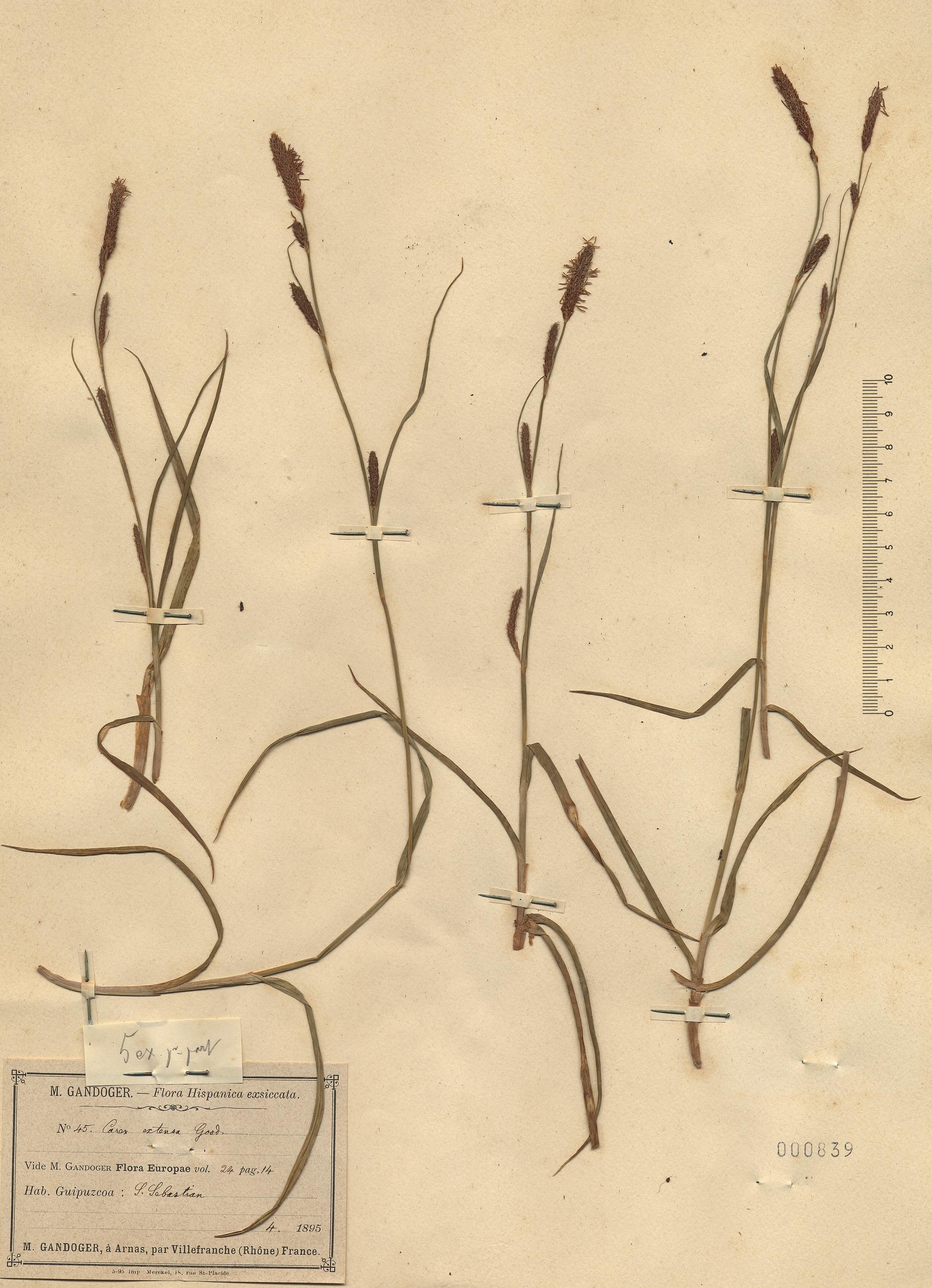© Hortus Botanicus Catinensis - Herb. sheet 000839<br>