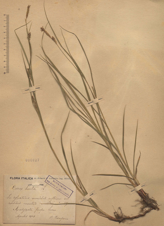 © Hortus Botanicus Catinensis - Herb. sheet 000827<br>
