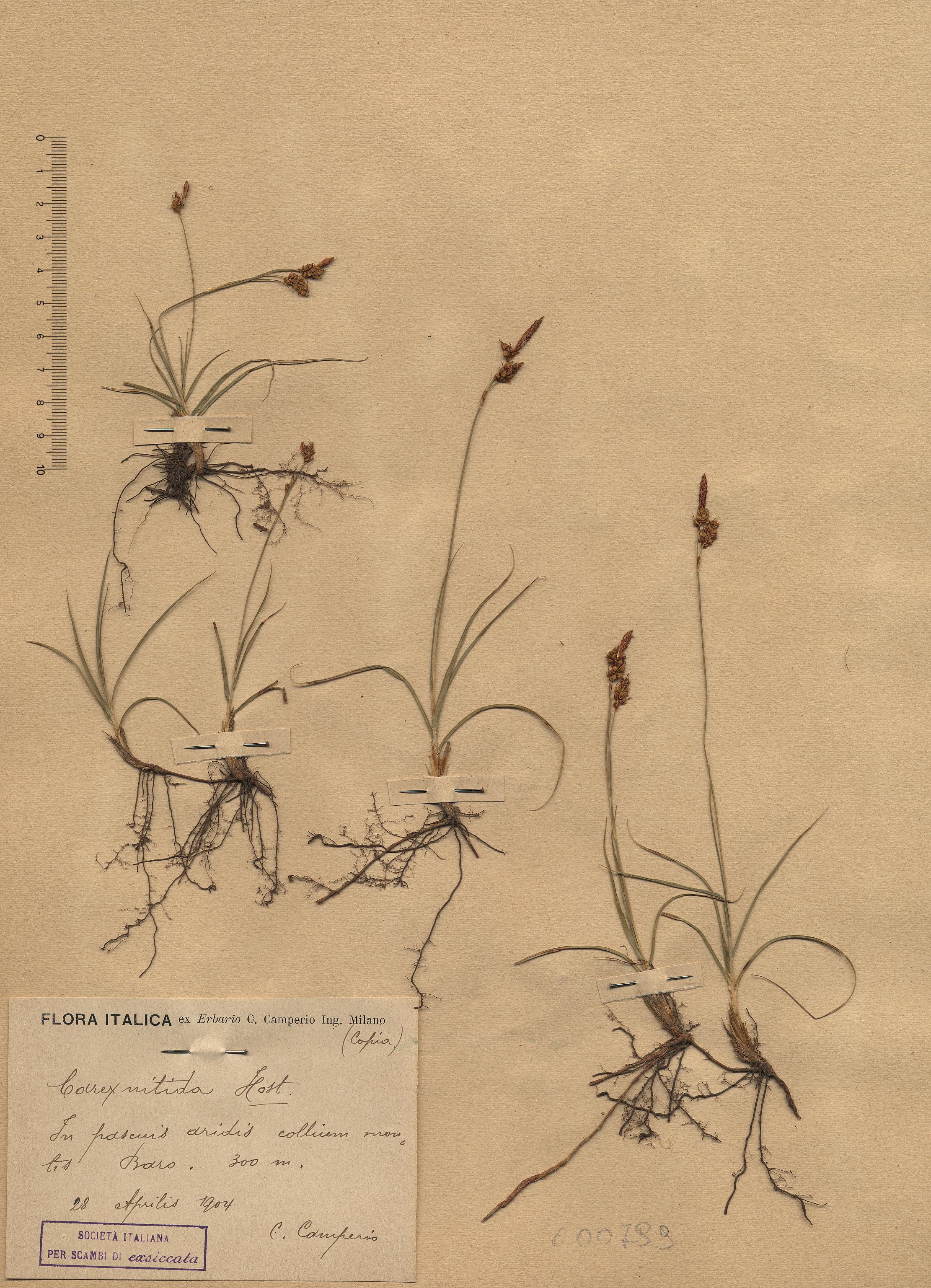 © Hortus Botanicus Catinensis - Herb. sheet 000799<br>