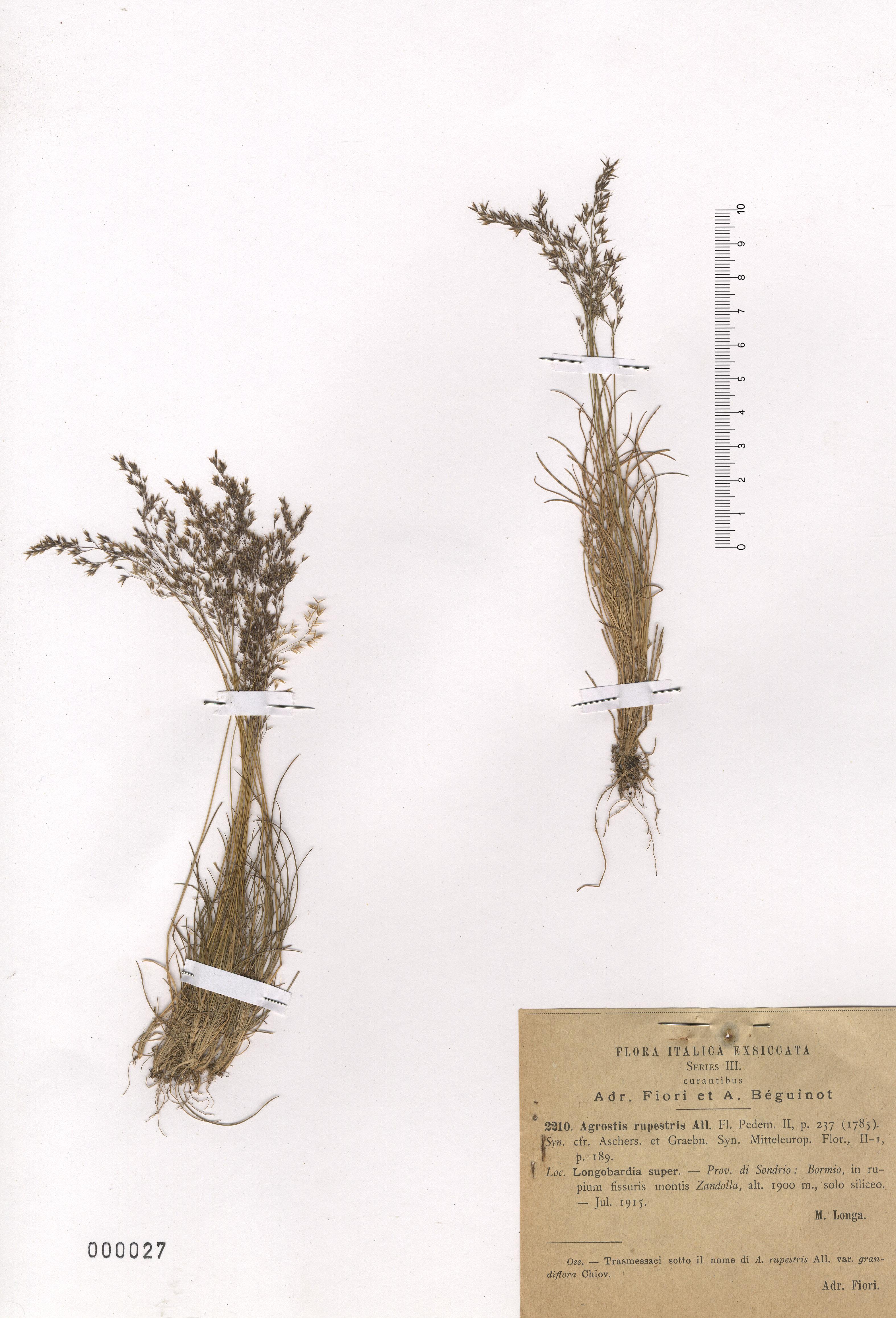 © Hortus Botanicus Catinensis - Herb. sheet 000027<br>