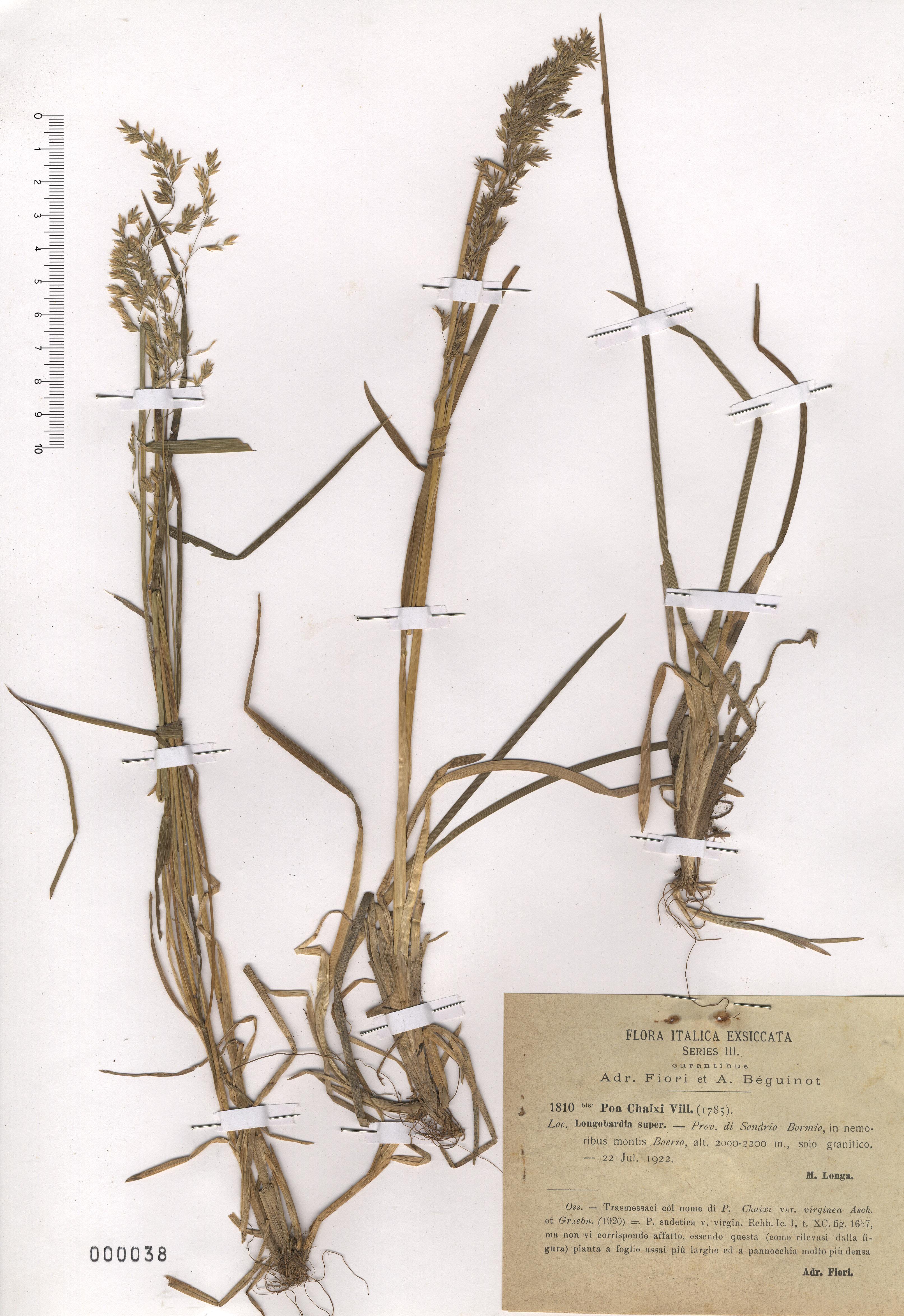 © Hortus Botanicus Catinensis - Herb. sheet 000038<br>