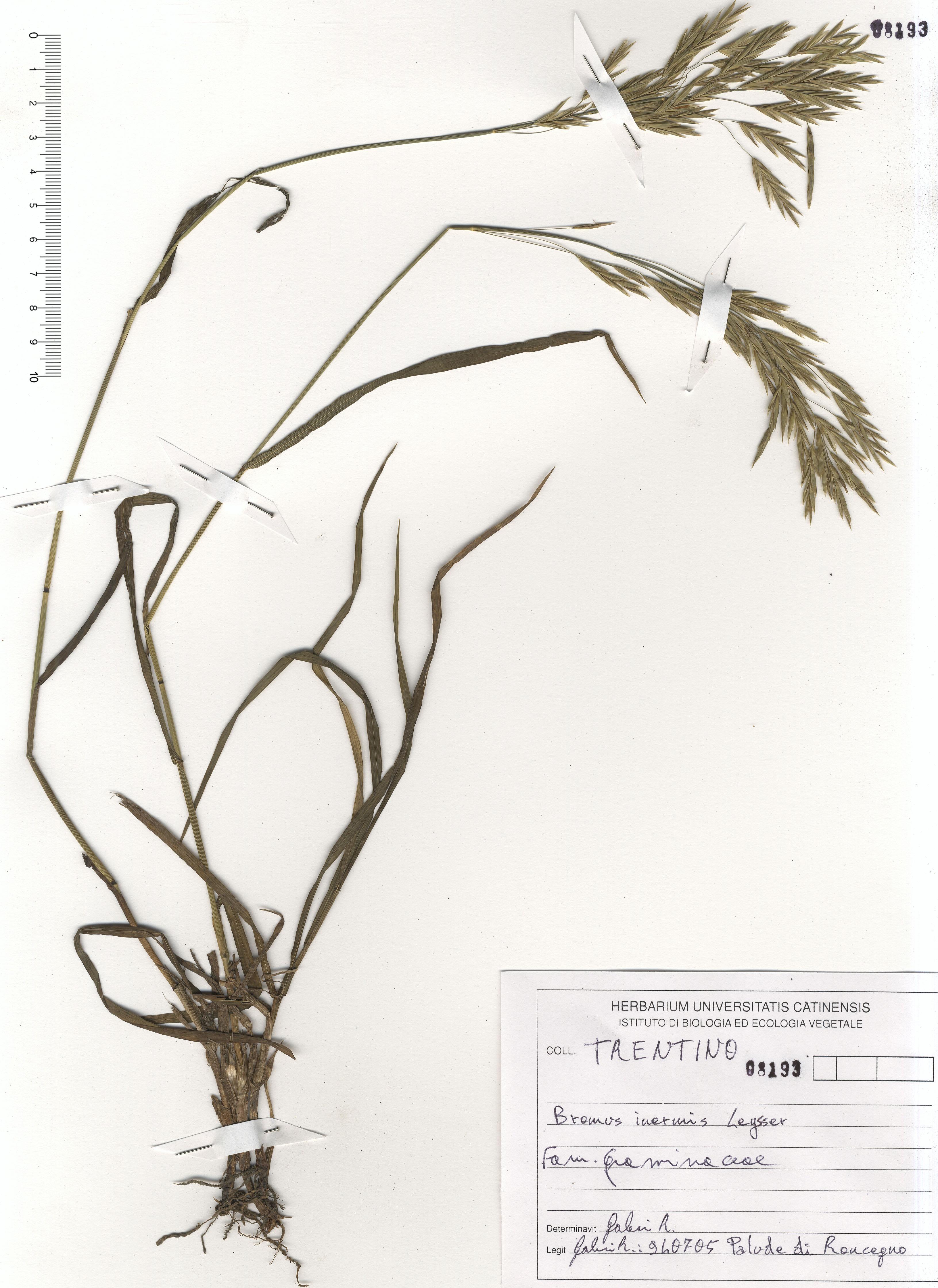 © Hortus Botanicus Catinensis - Herb. sheet 108193<br>
