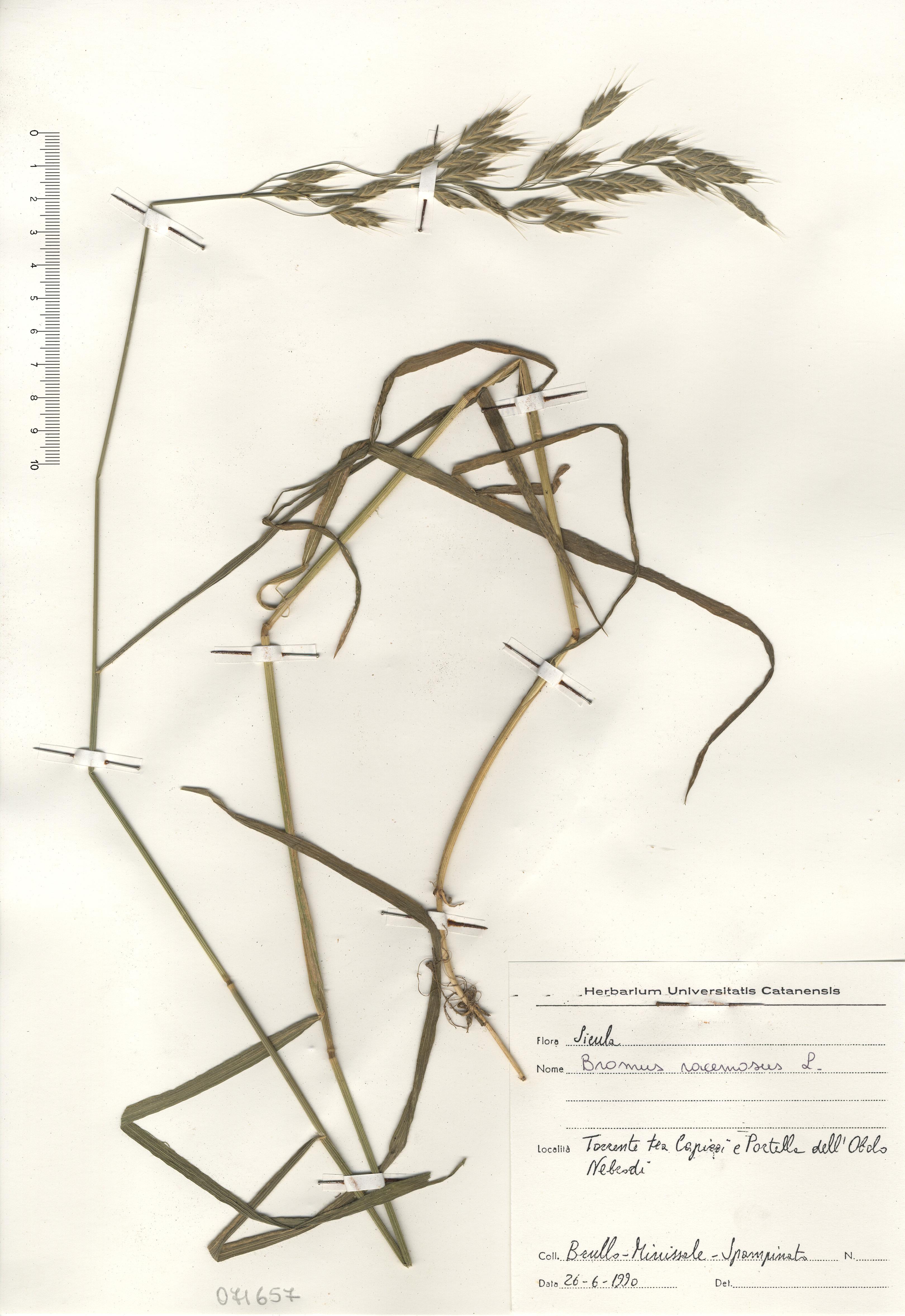© Hortus Botanicus Catinensis - Herb. sheet 071657<br>