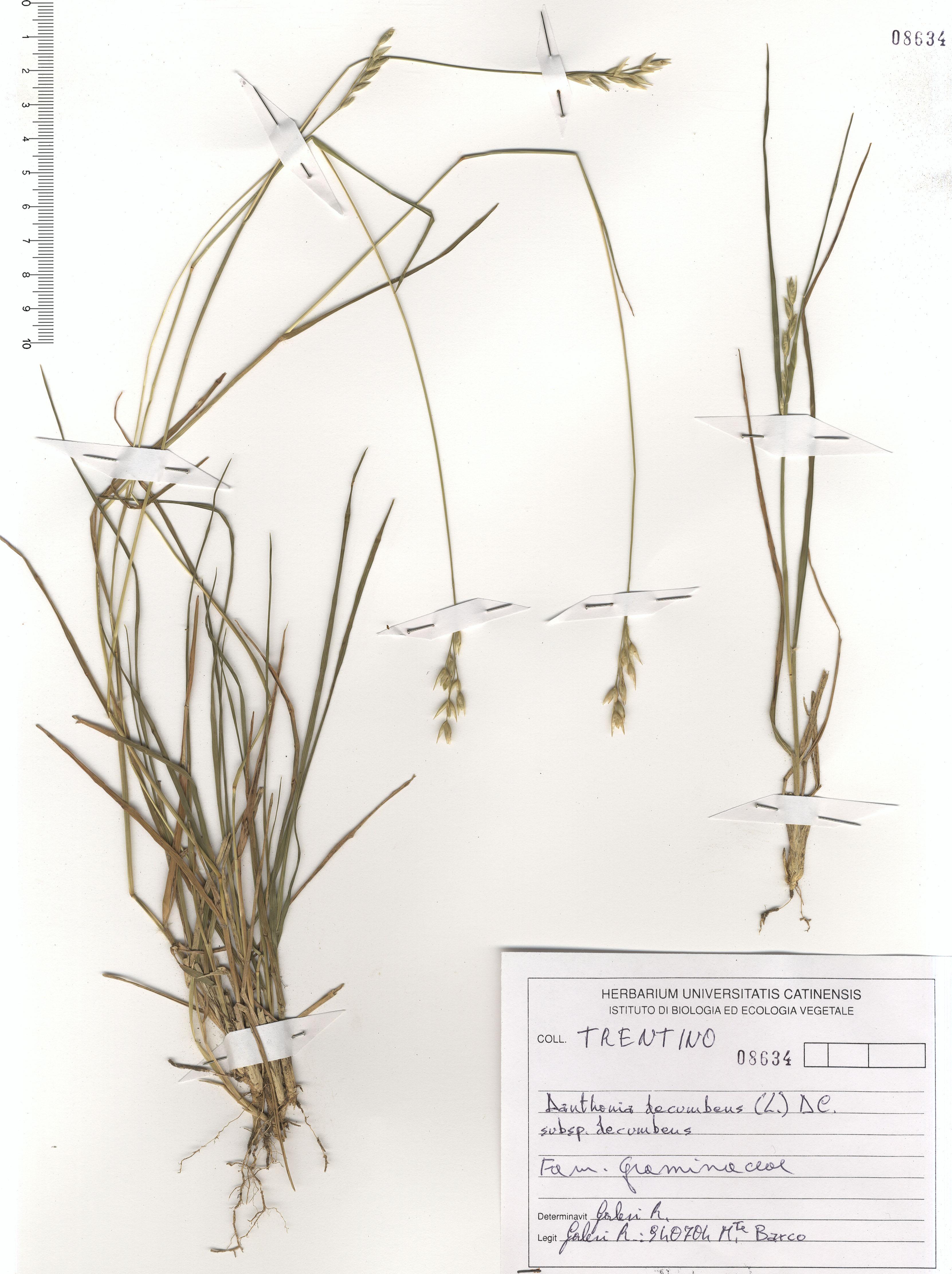 © Hortus Botanicus Catinensis - Herb. sheet 108634<br>