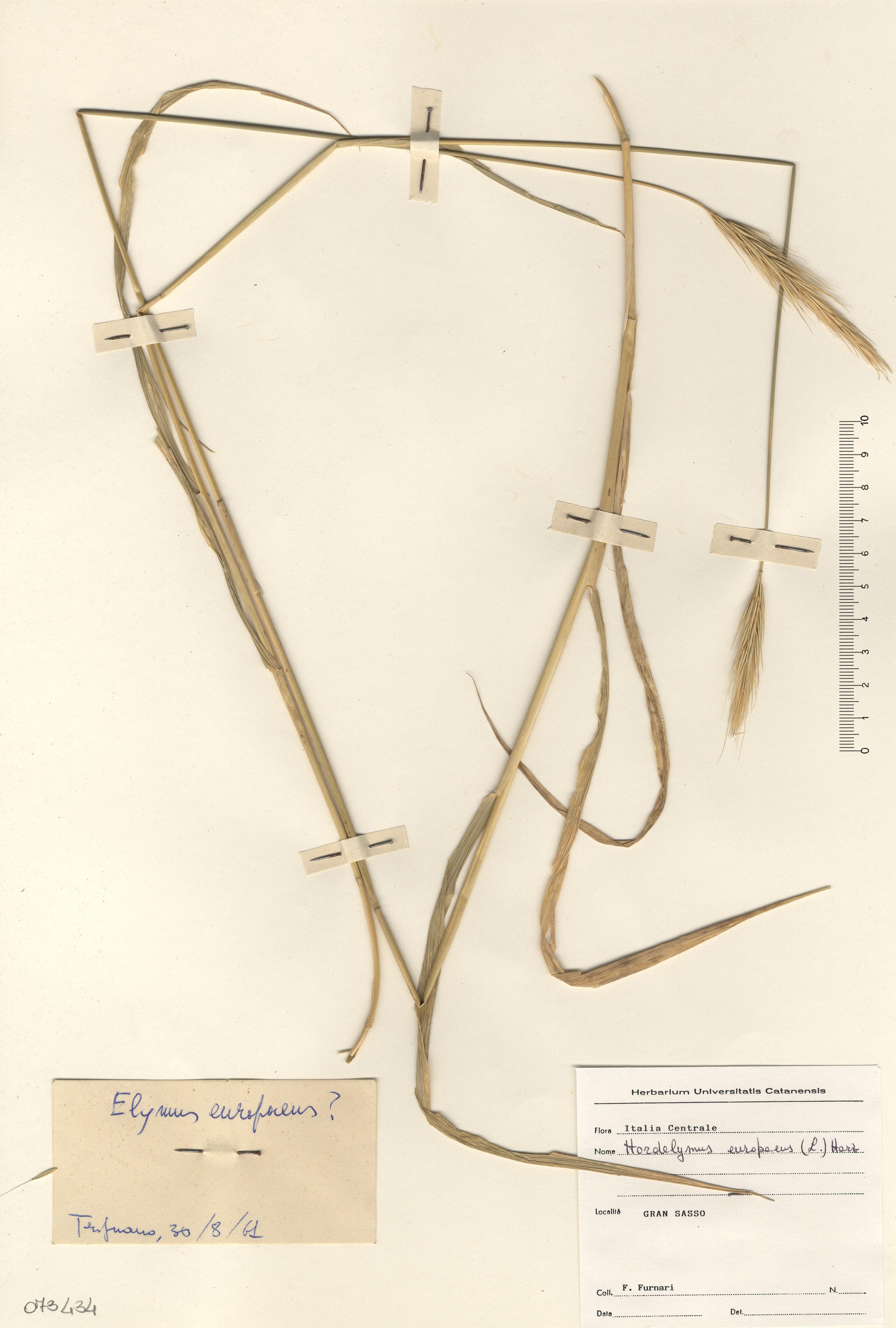 © Hortus Botanicus Catinensis - Herb. sheet 073434<br>