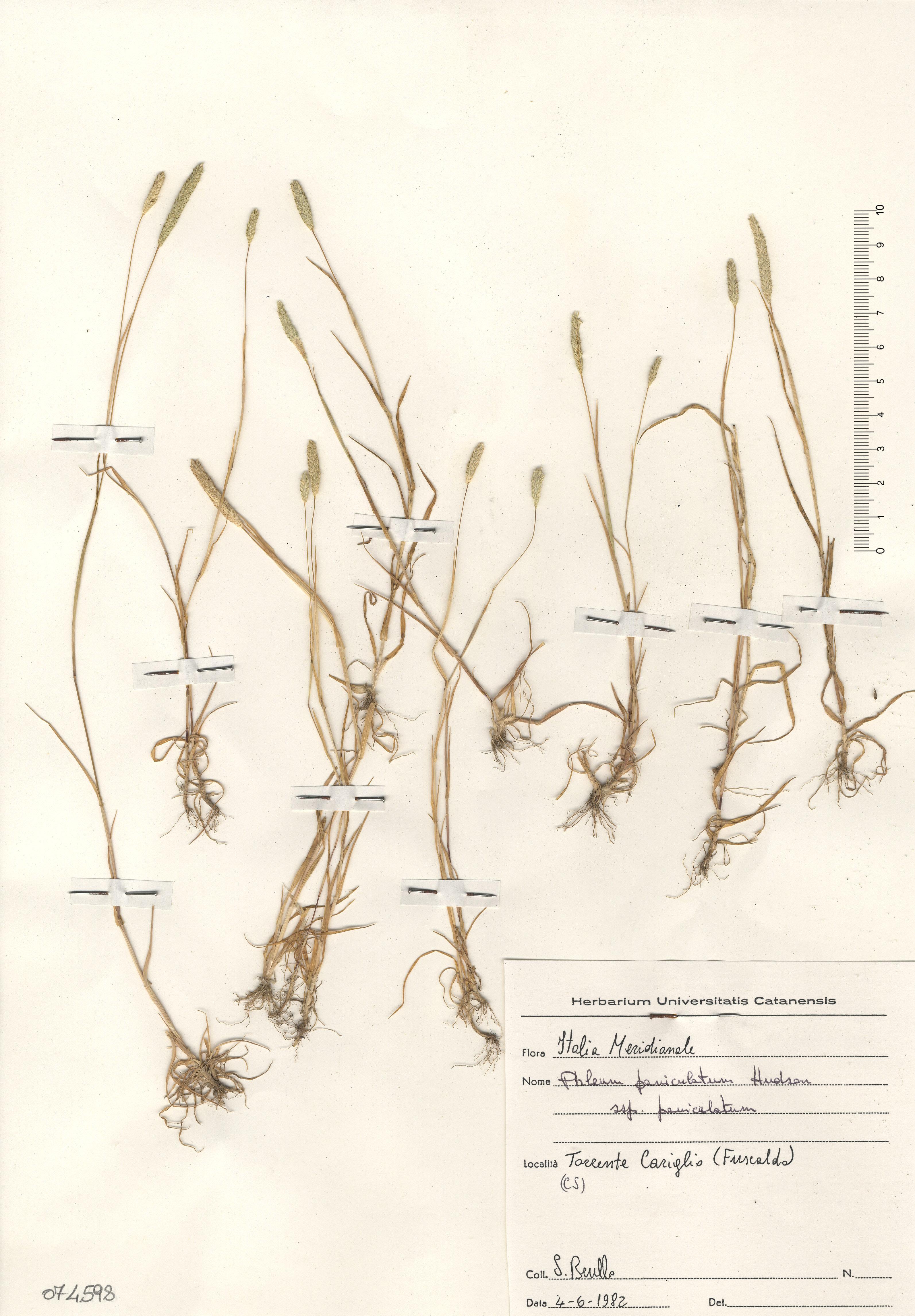 © Hortus Botanicus Catinensis - Herb. sheet 074598<br>