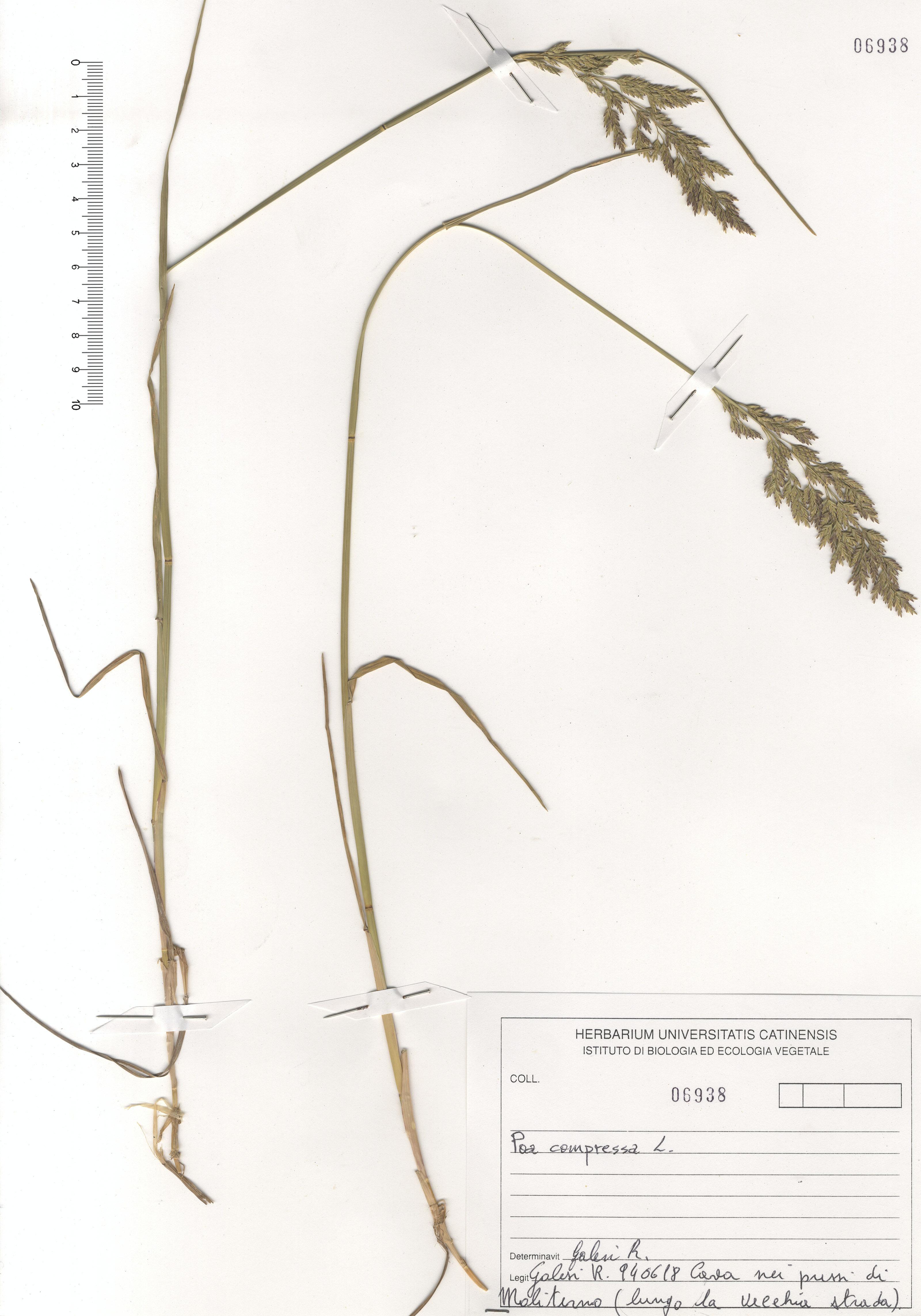 © Hortus Botanicus Catinensis - Herb. sheet 106938<br>