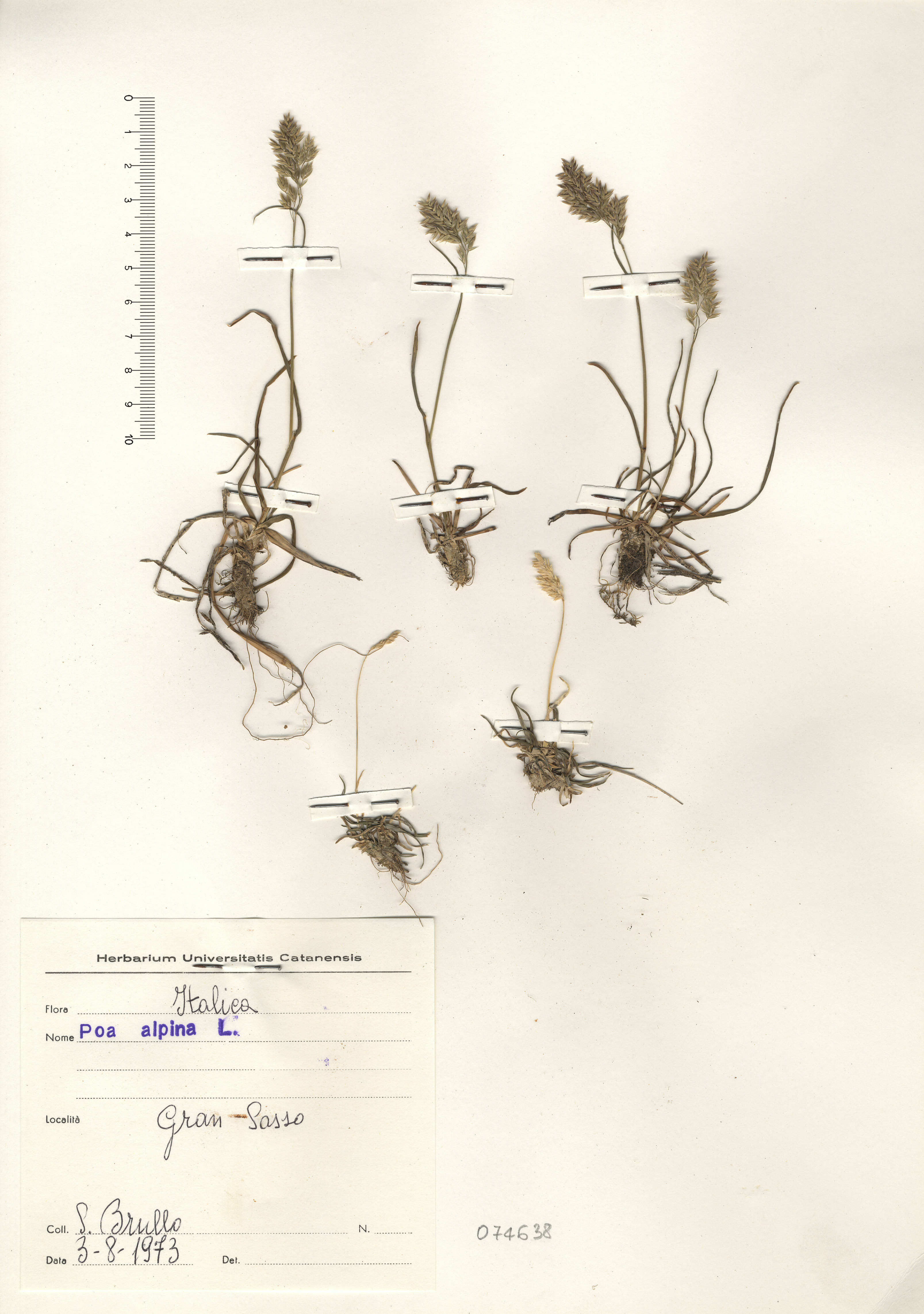 © Hortus Botanicus Catinensis - Herb. sheet 074638<br>