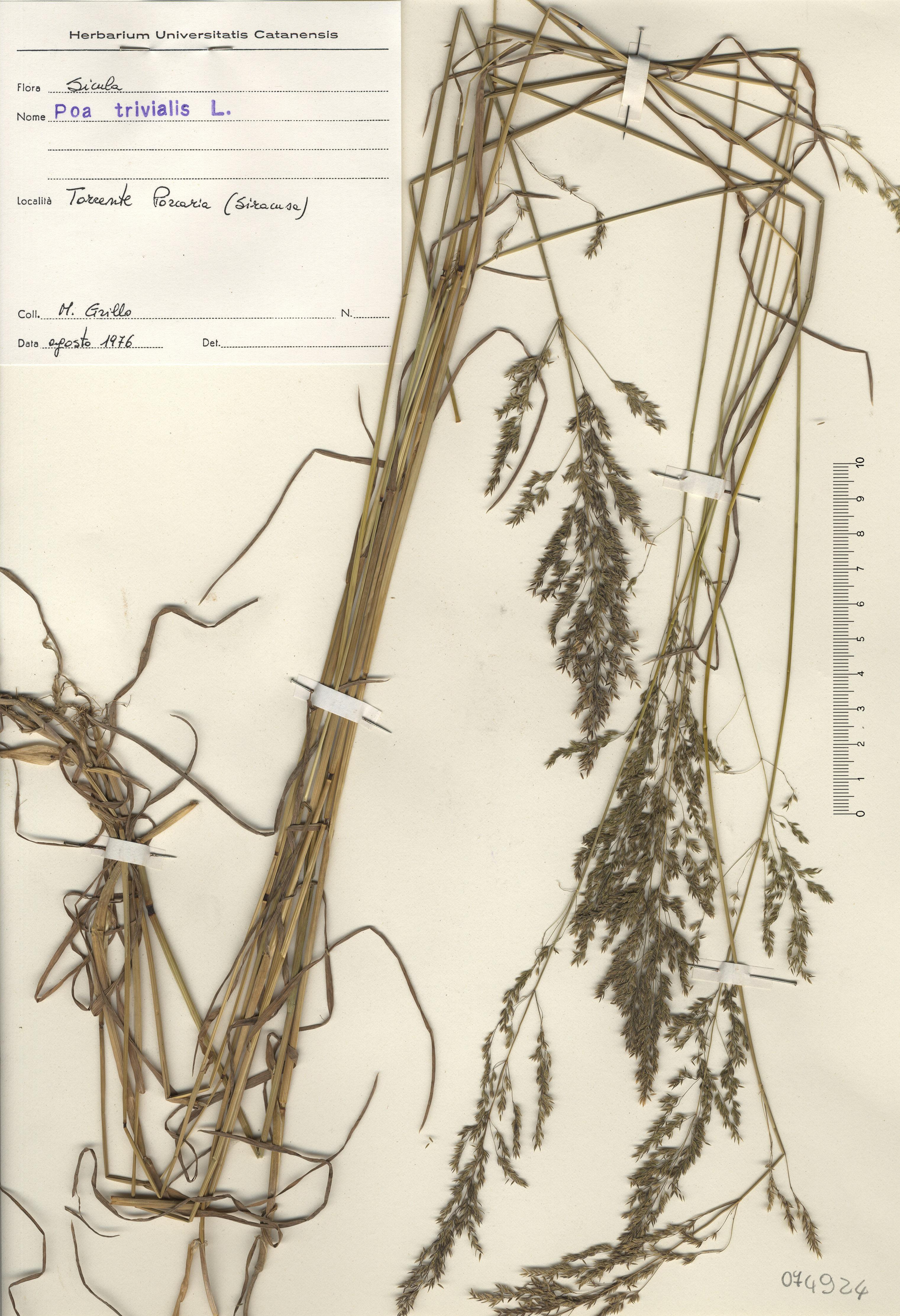 © Hortus Botanicus Catinensis - Herb. sheet 074924<br>