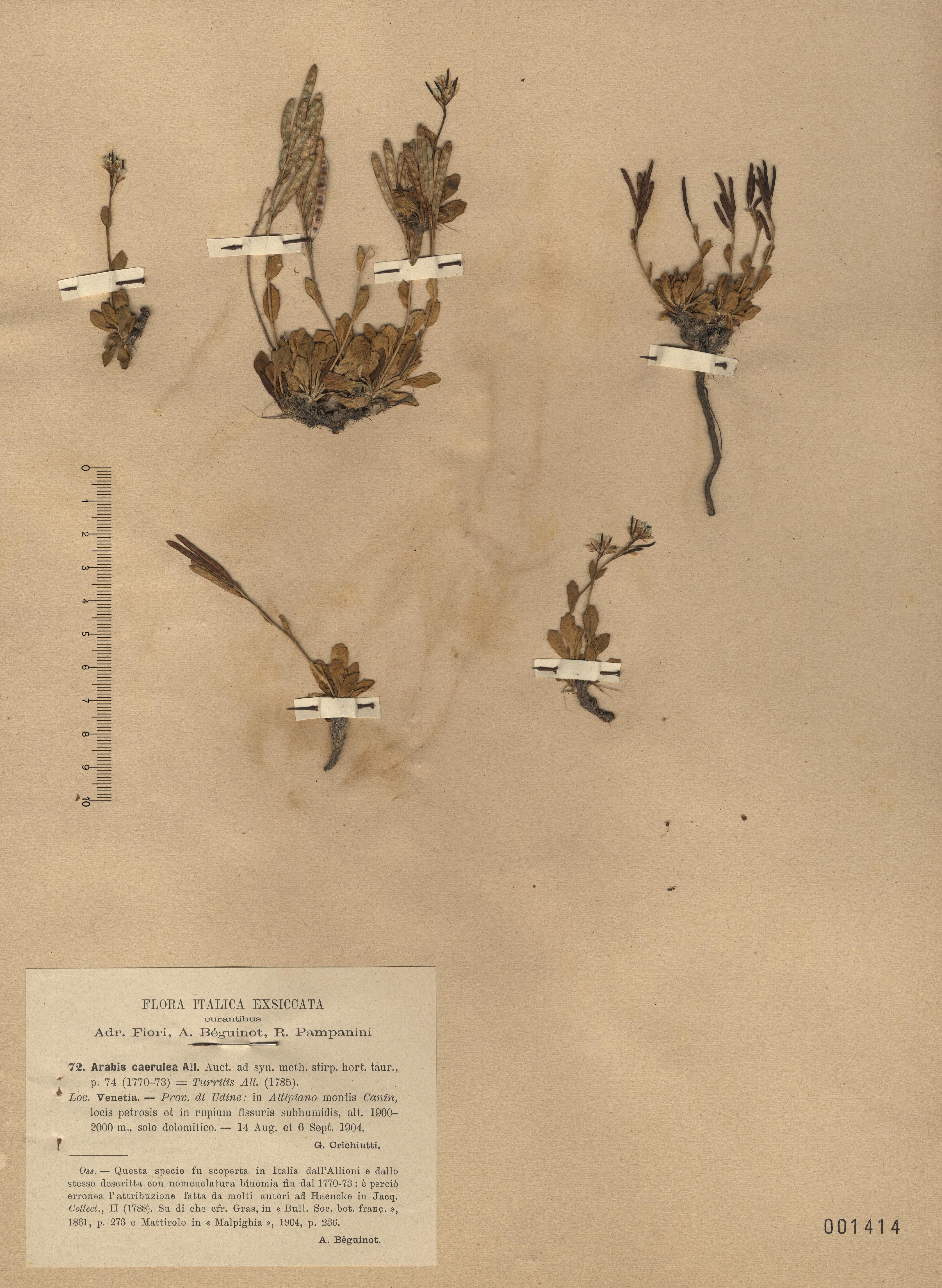 © Hortus Botanicus Catinensis - Heb. sheet 001414<br>