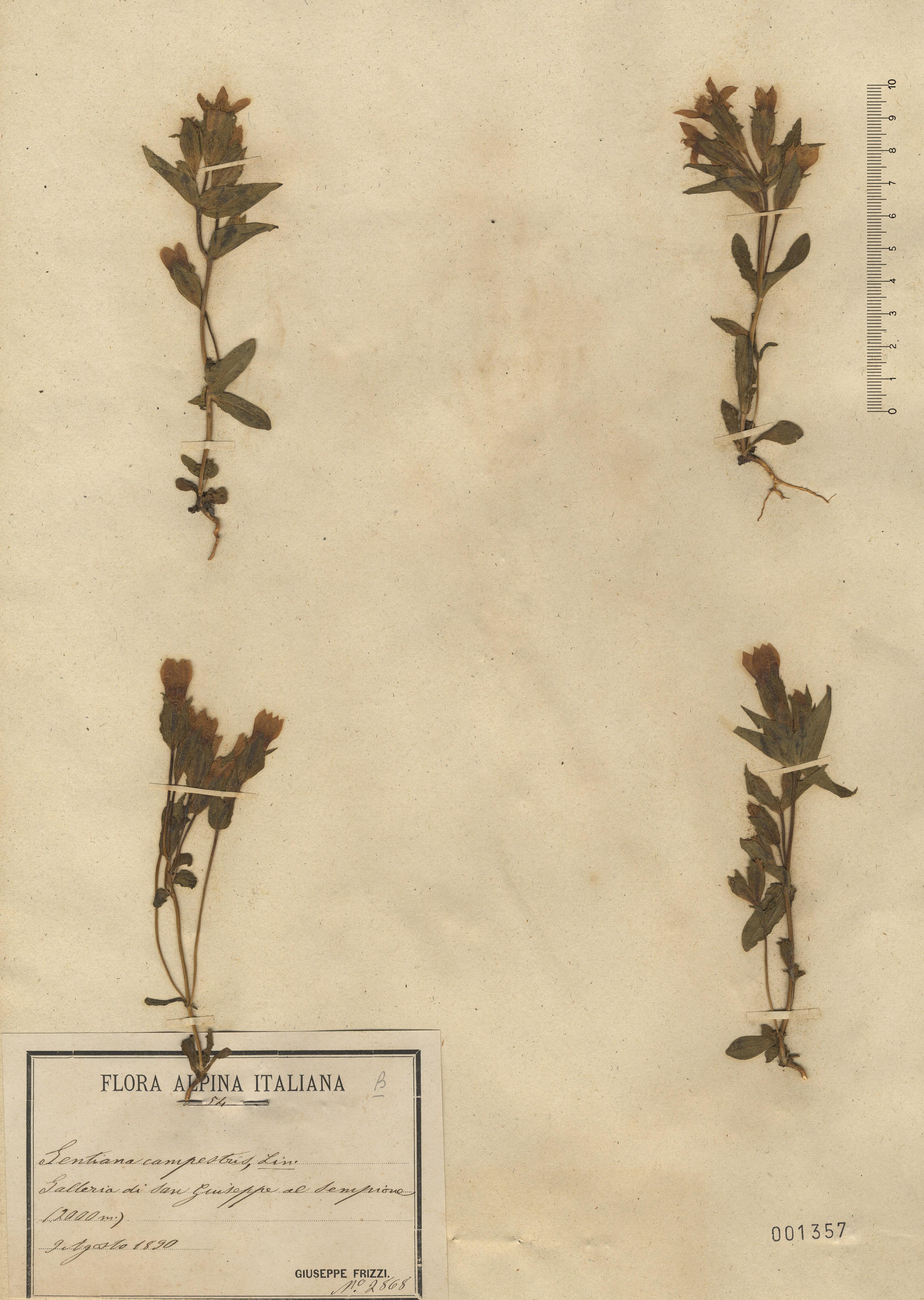 &copy; Hortus Botanicus Catinensis 001357<br>