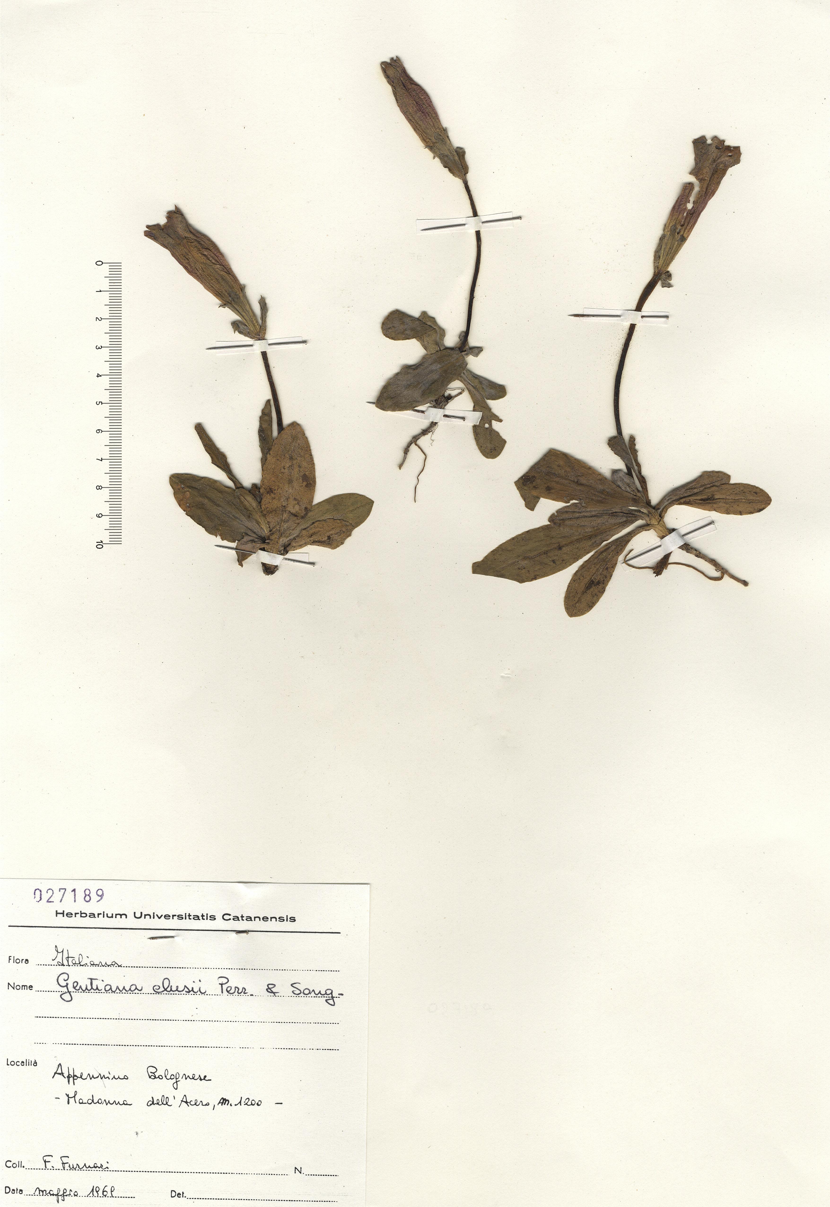 © Hortus Botanicus Catinensis 027189<br>