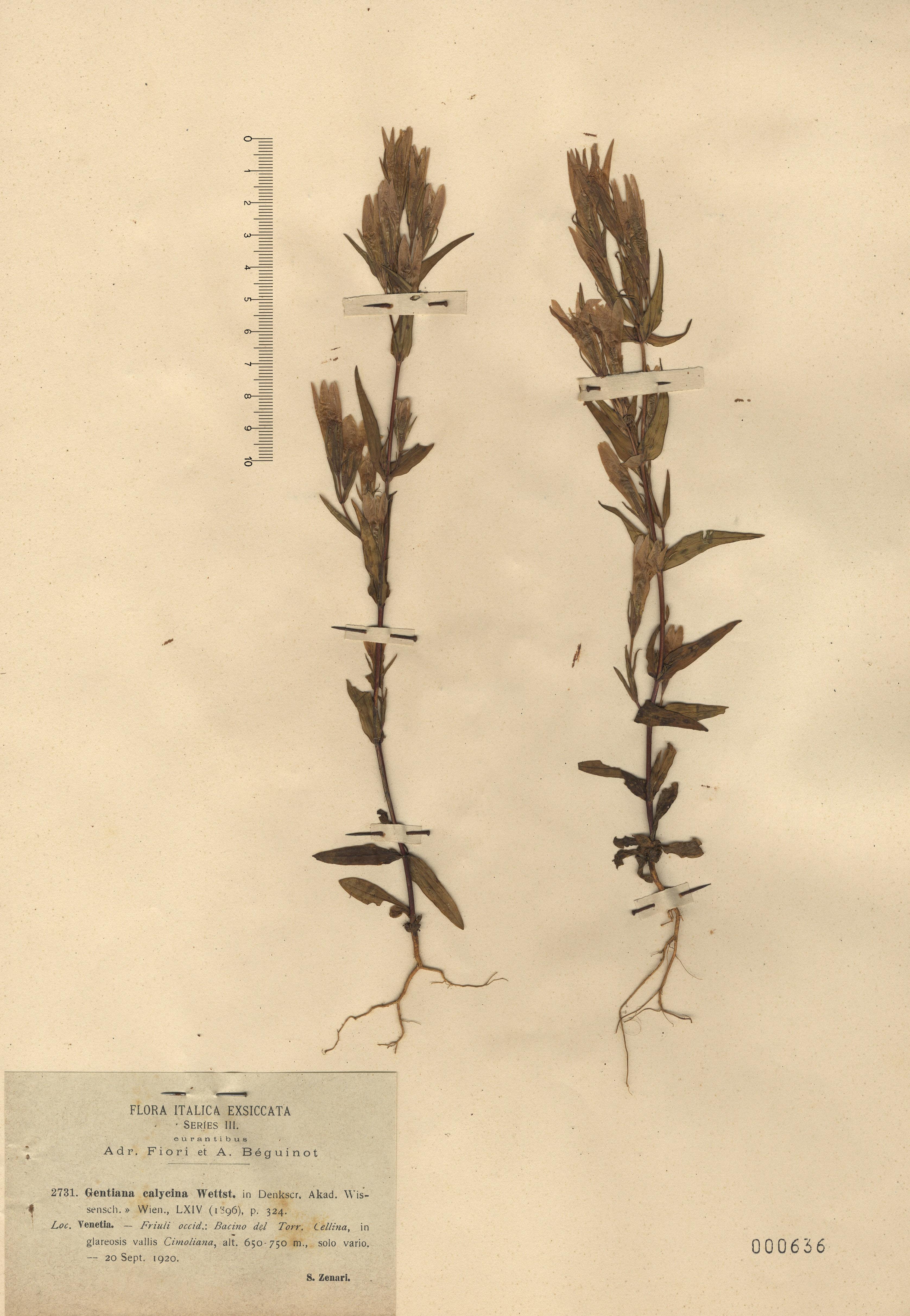 © Hortus Botanicus Catinensis 000636<br>