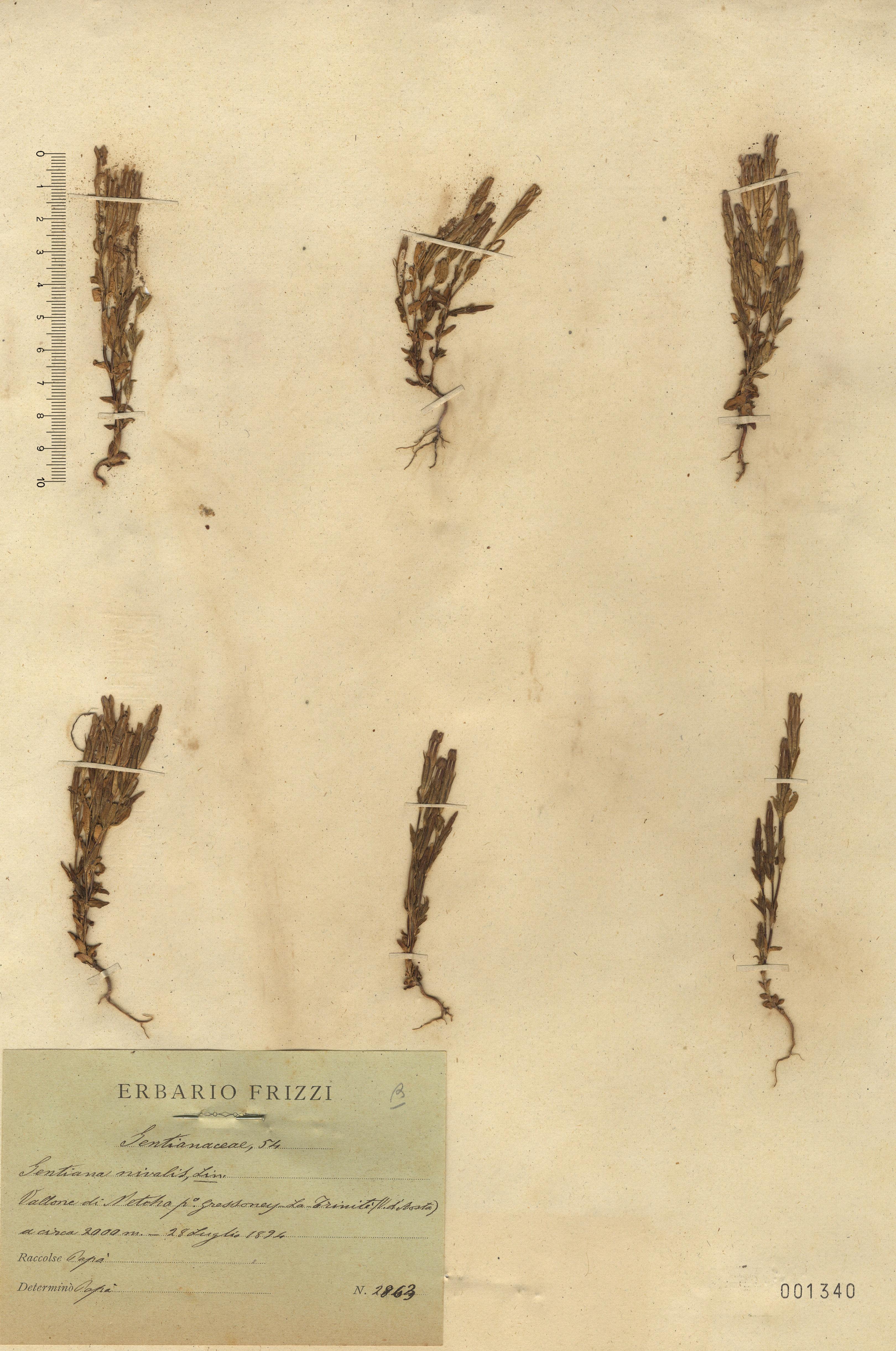 © Hortus Botanicus Catinensis 001340<br>