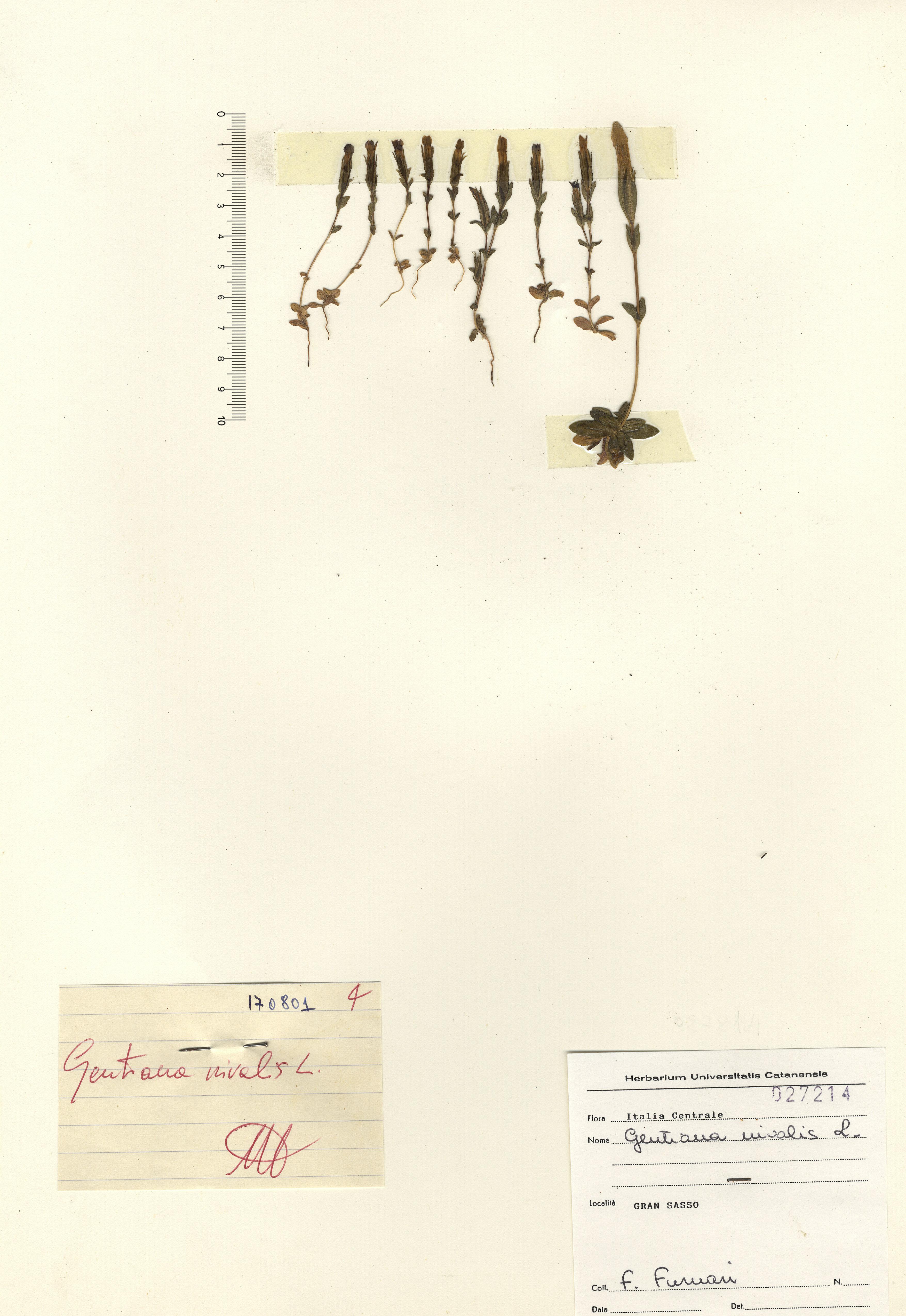 © Hortus Botanicus Catinensis 027214<br>