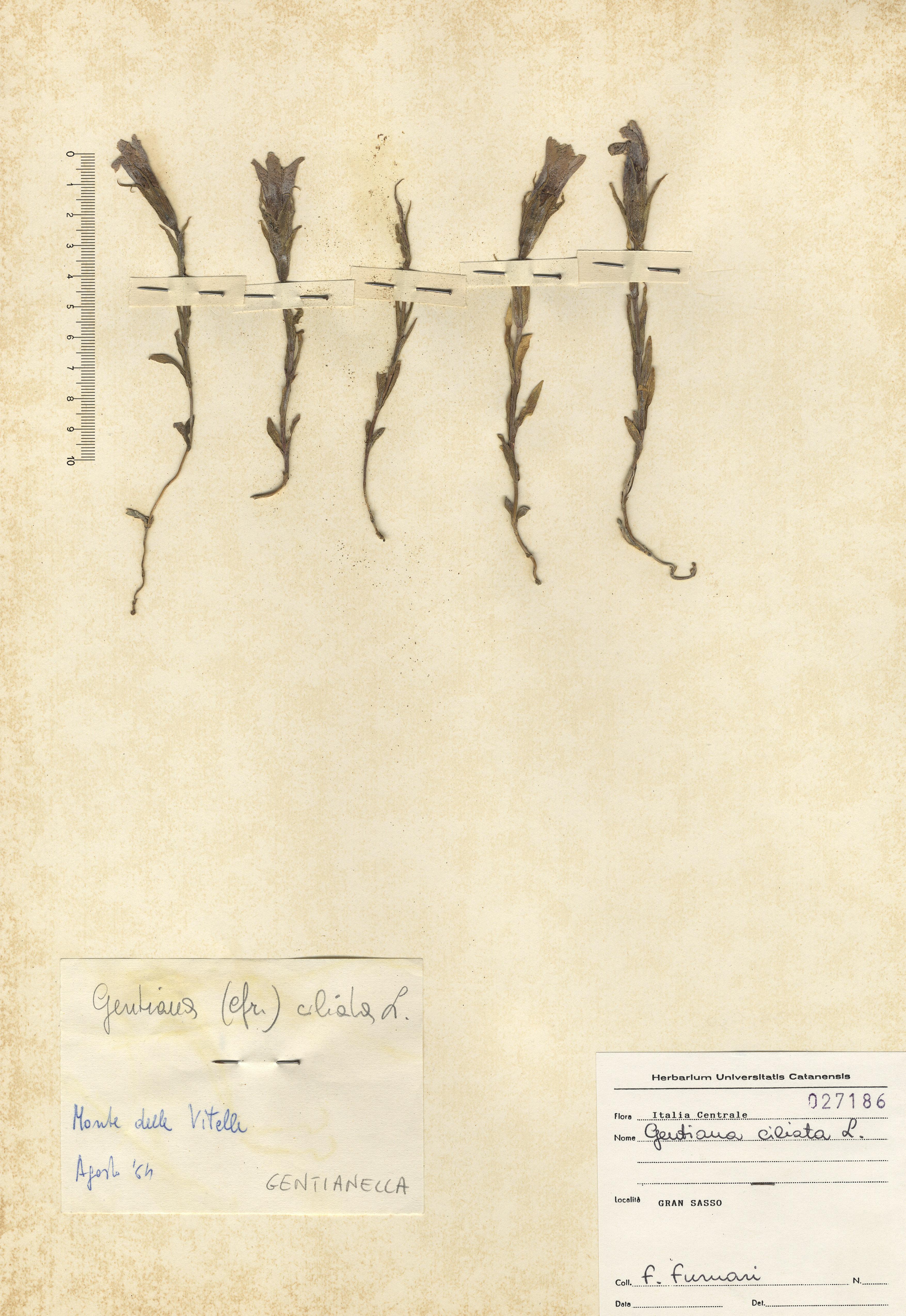 © Hortus Botanicus Catinensis 027186<br>