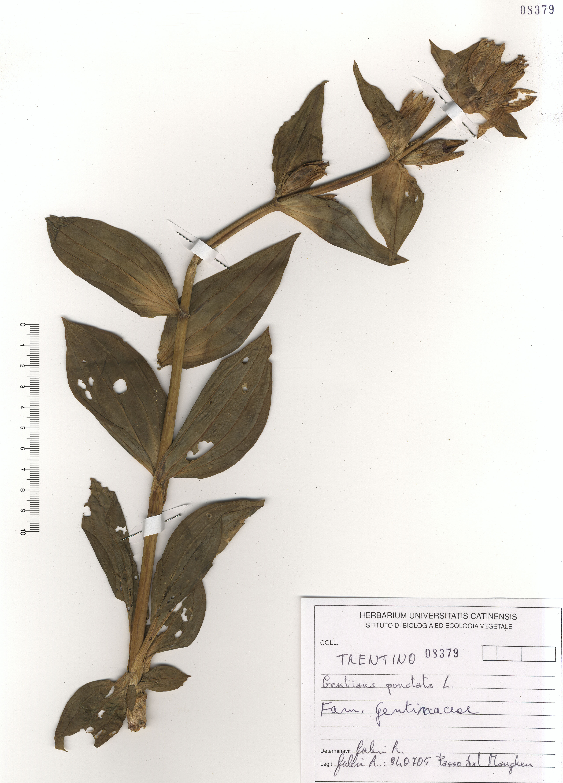 © Hortus Botanicus Catinensis 108379<br>