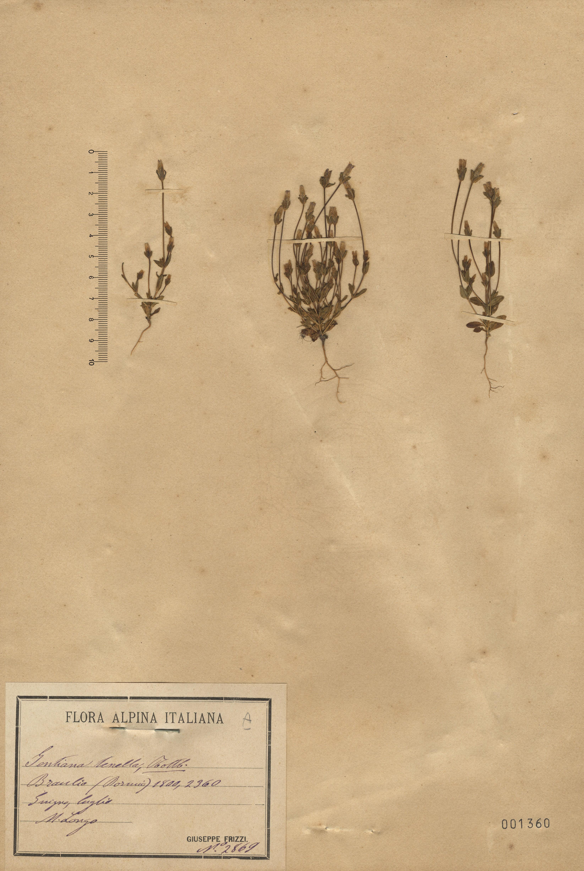 © Hortus Botanicus Catinensis 001360<br>