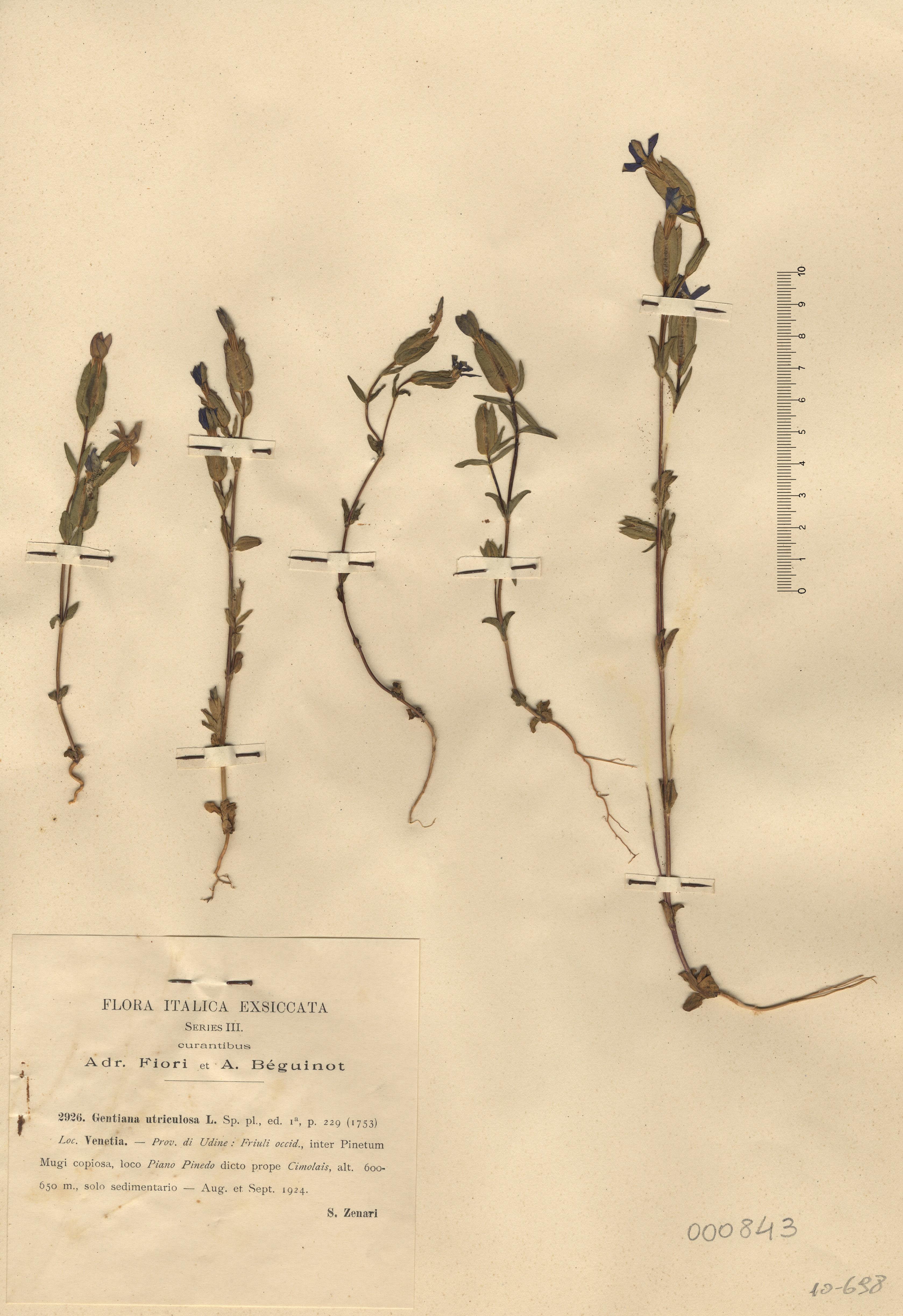 © Hortus Botanicus Catinensis 000843<br>