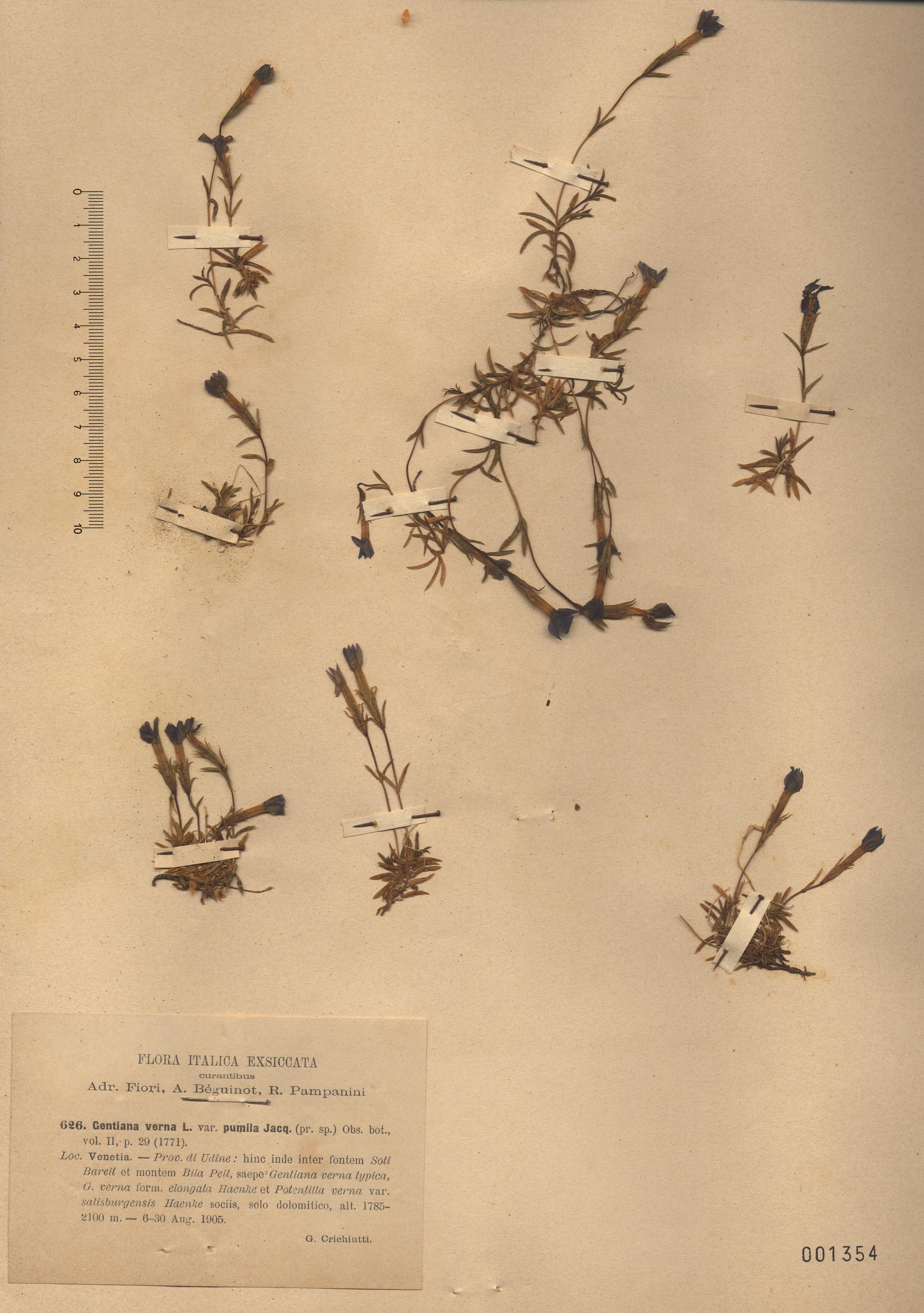 © Hortus Botanicus Catinensis 001354<br>