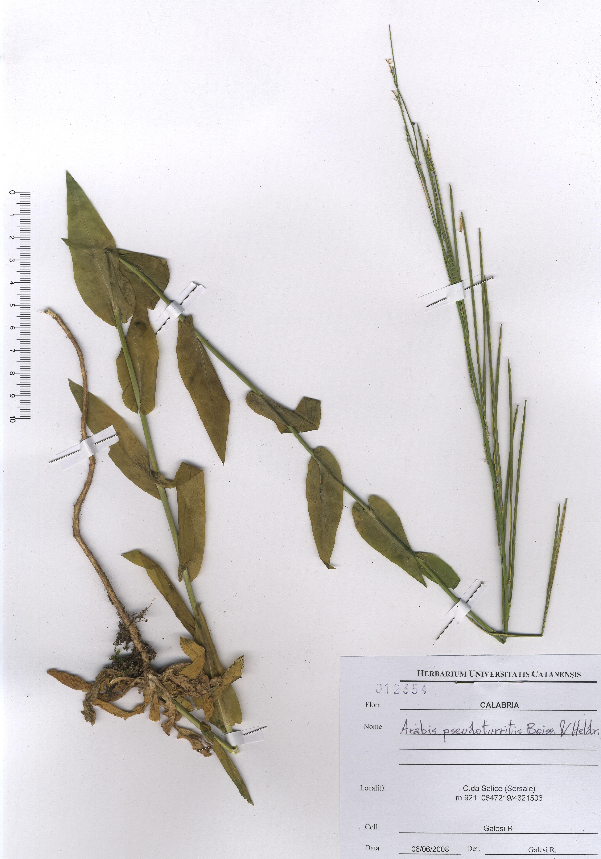 © Hortus Botanicus Catinensis - Herb. sheet 012354<br>