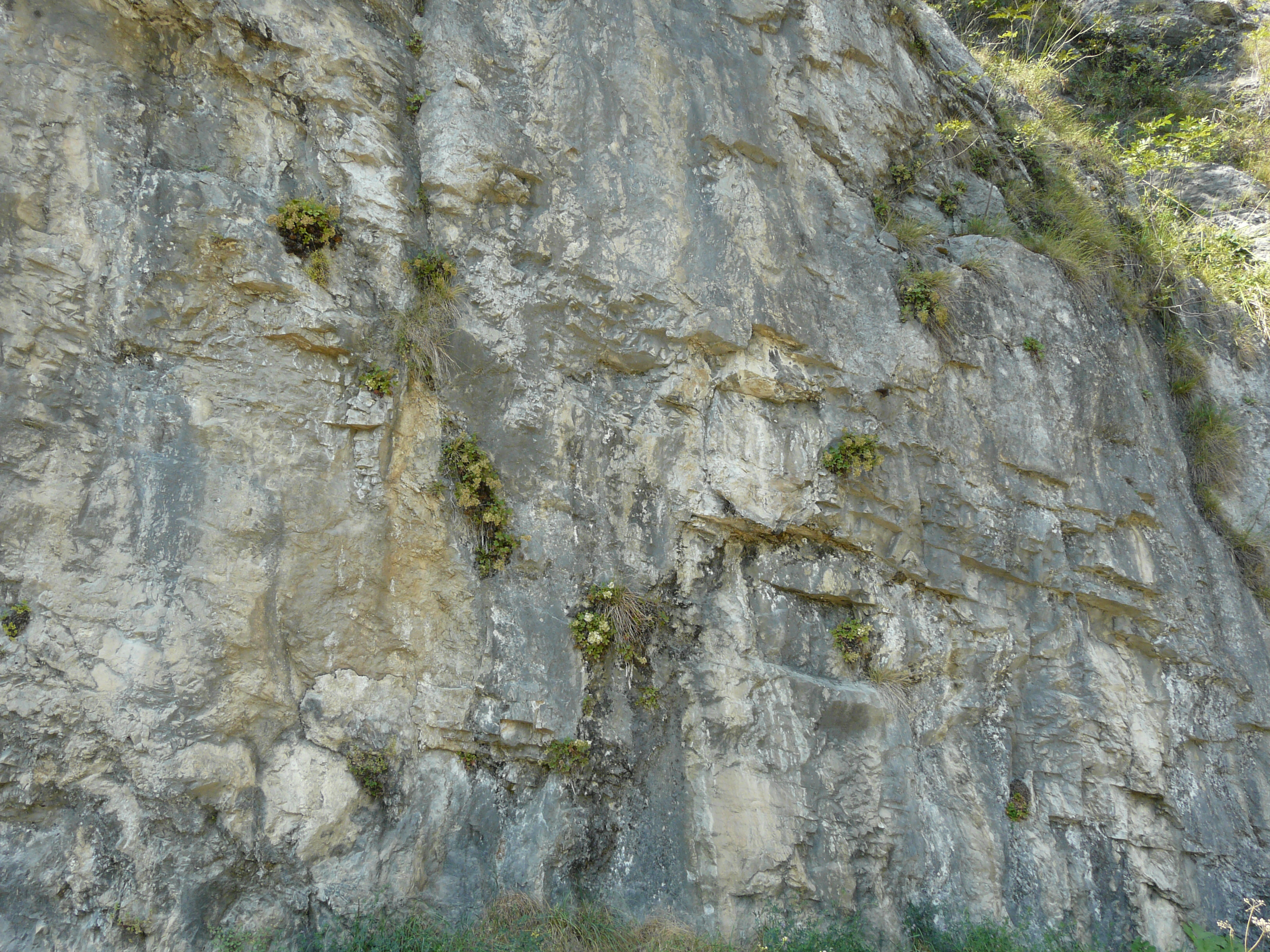 © Dipartimento di Scienze della Vita, Università di Trieste<br>by Andrea Moro<br>Comune di Riva del Garda, parete rocciosa lungo la strada del Ponale, TN, Trentino-Alto Adige/Südtirol, Italia, 24/08/2011<br>Distributed under CC-BY-SA 4.0 license.