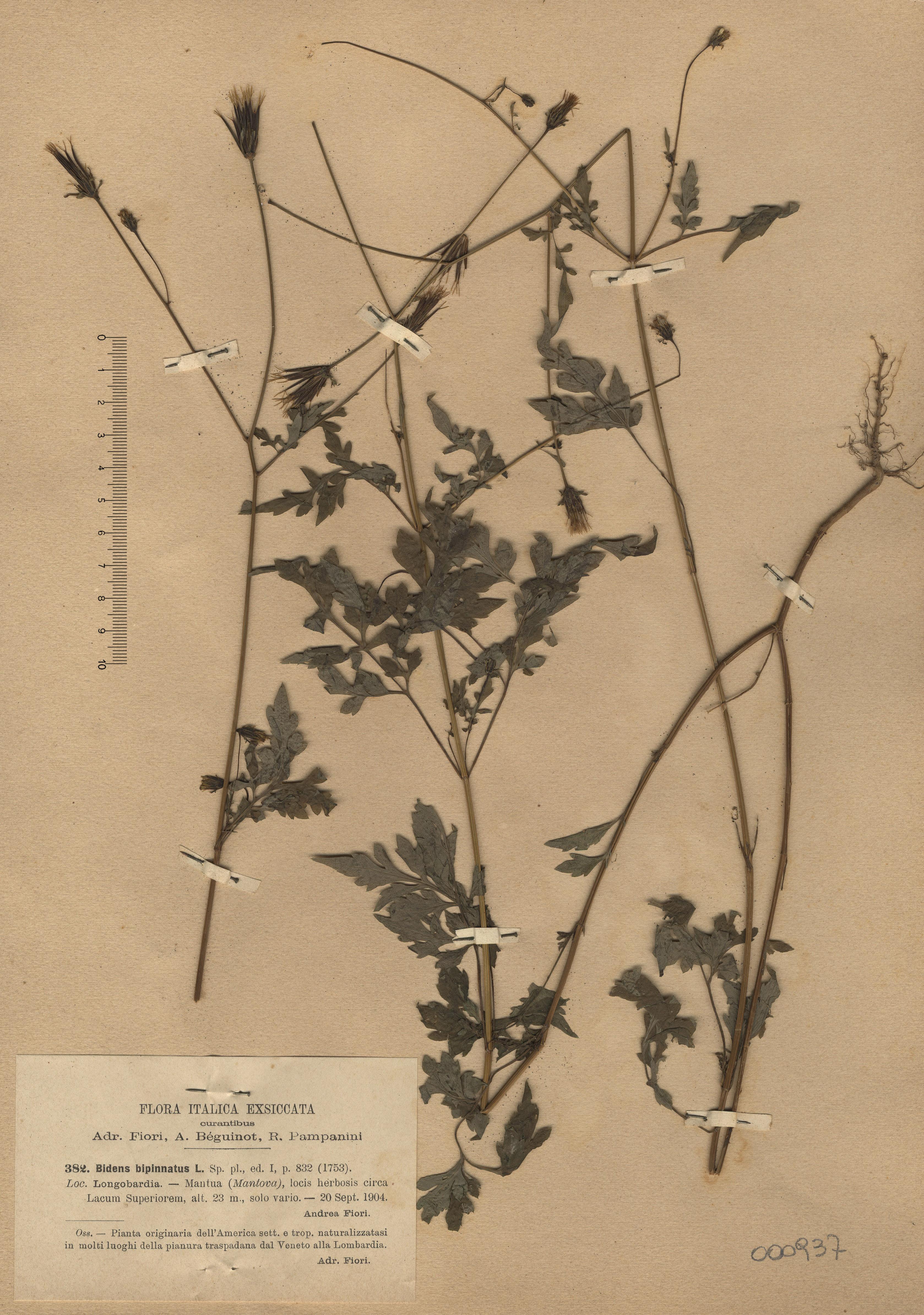 © Hortus Botanicus Catinensis - Herb. sheet 000987<br>