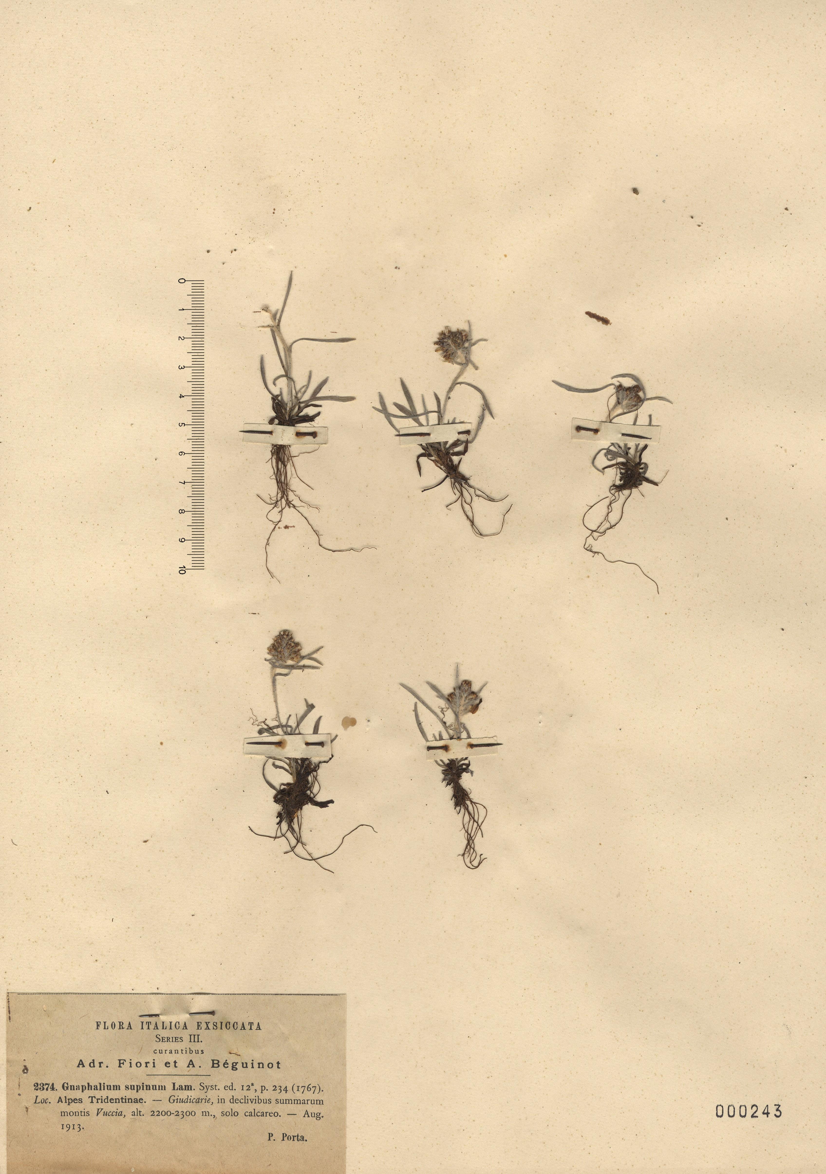 © Hortus Botanicus Catinensis - Herb. sheet 000243<br>