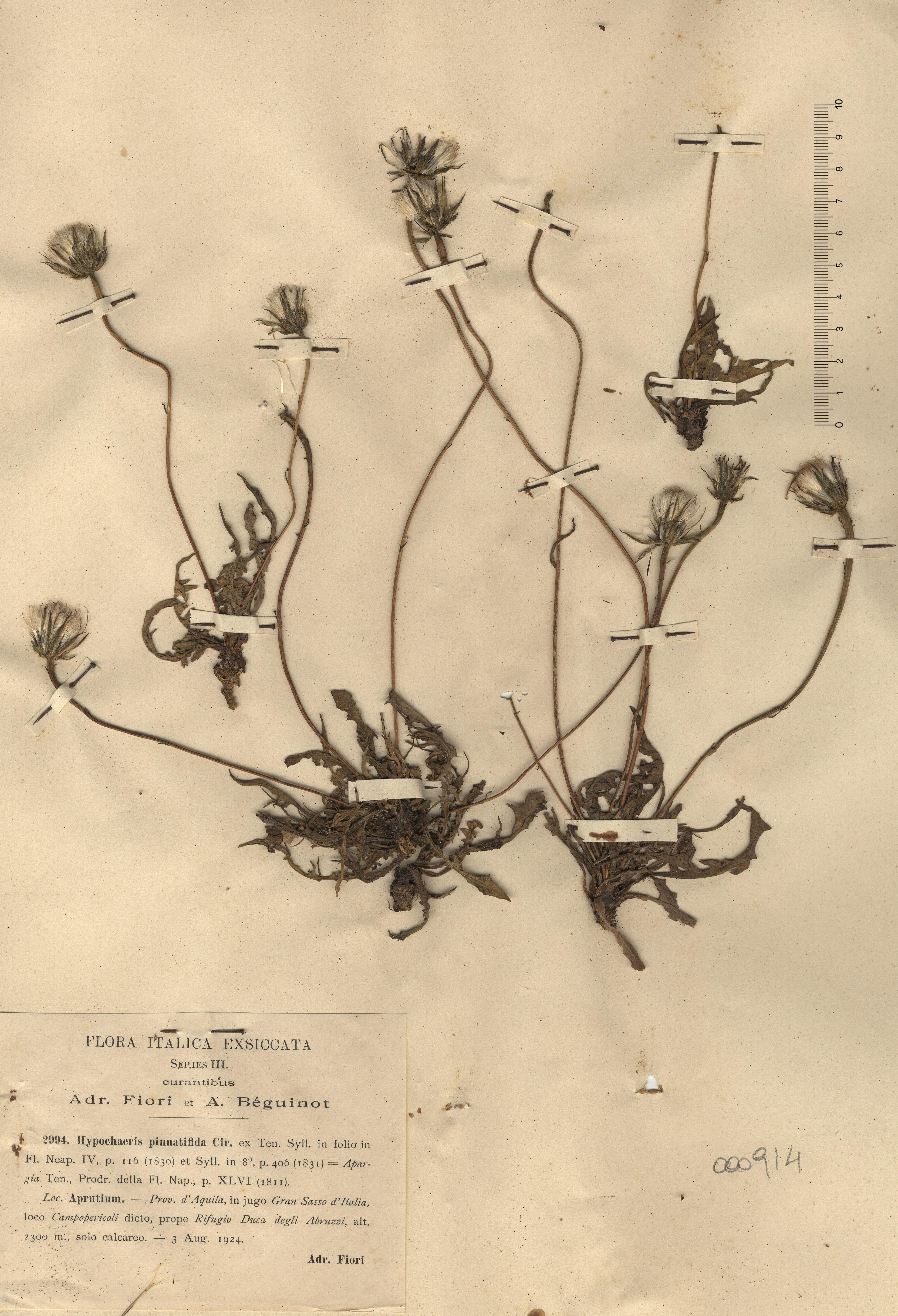 © Hortus Botanicus Catinensis - Herb. sheet 000914<br>