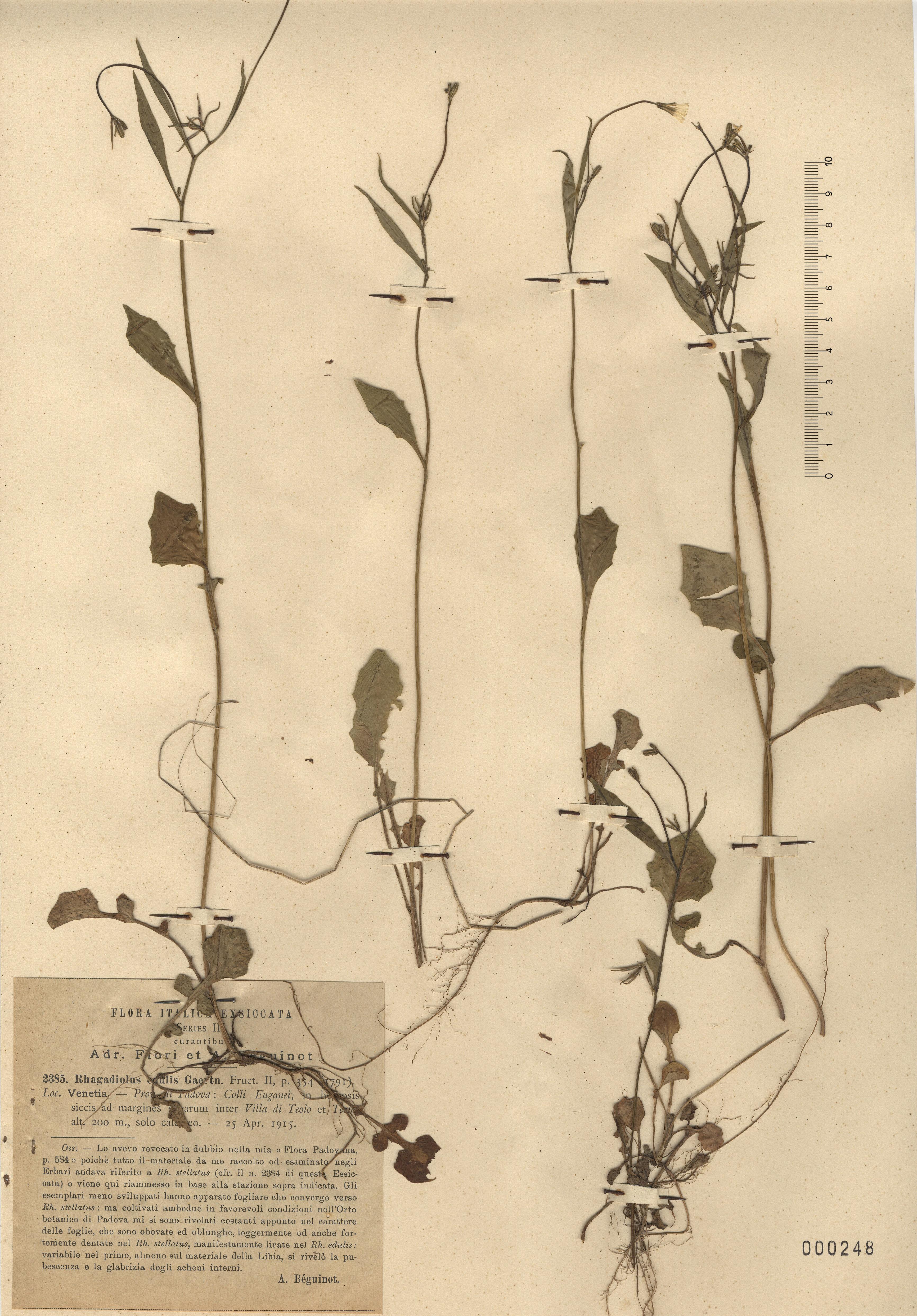 © Hortus Botanicus Catinensis - Herb. sheet 000248<br>