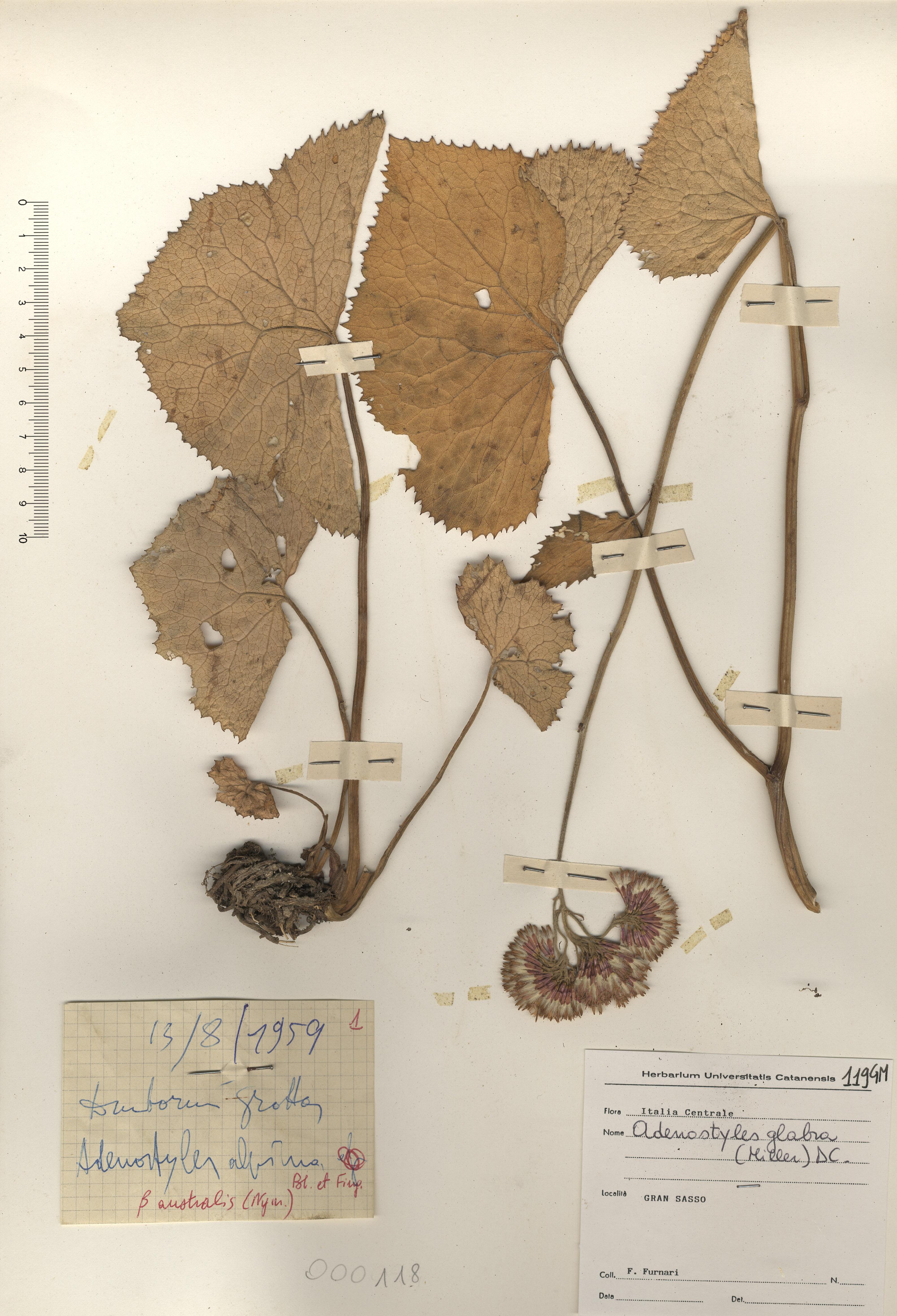 © Hortus Botanicus Catinensis - Herb. sheet 000118<br>