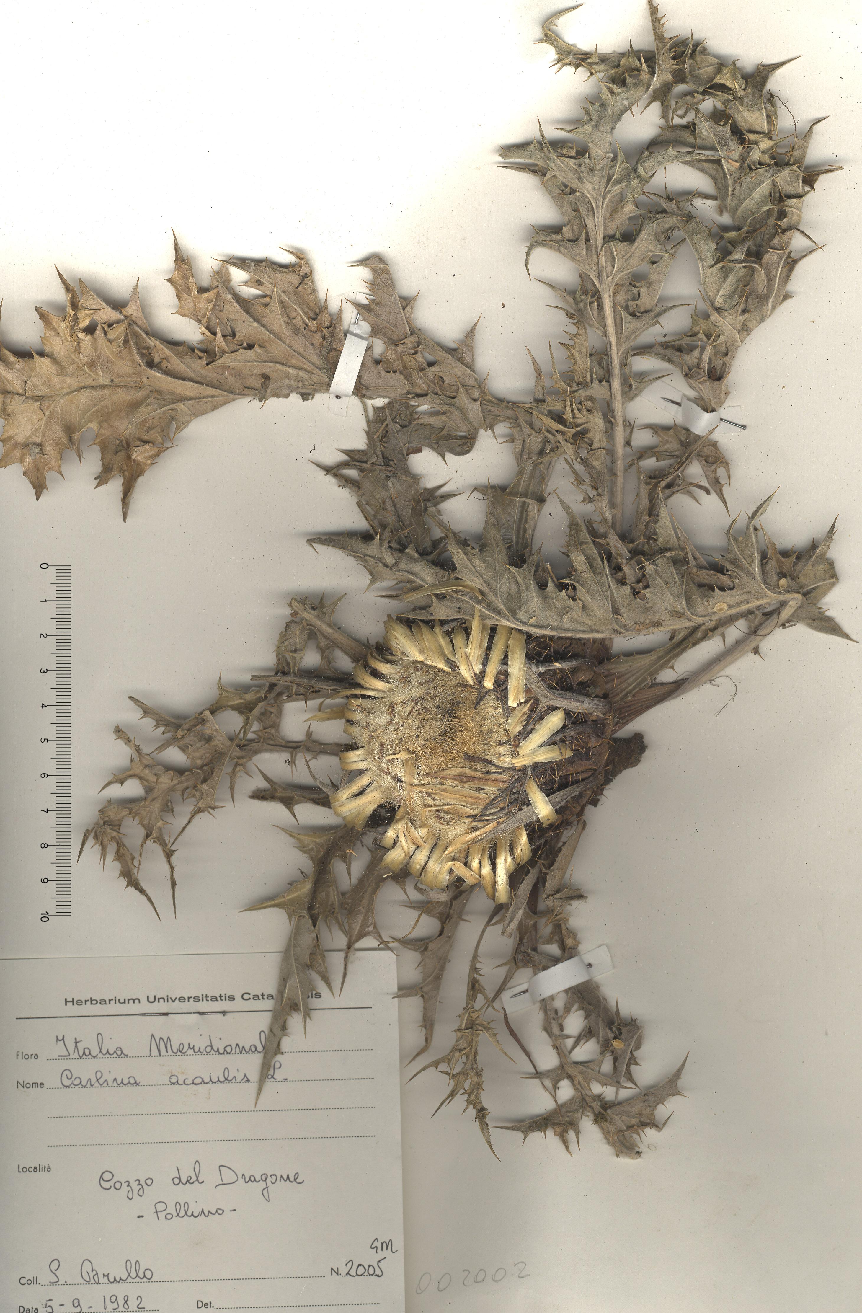 © Hortus Botanicus Catinensis - Herb. sheet 002002<br>