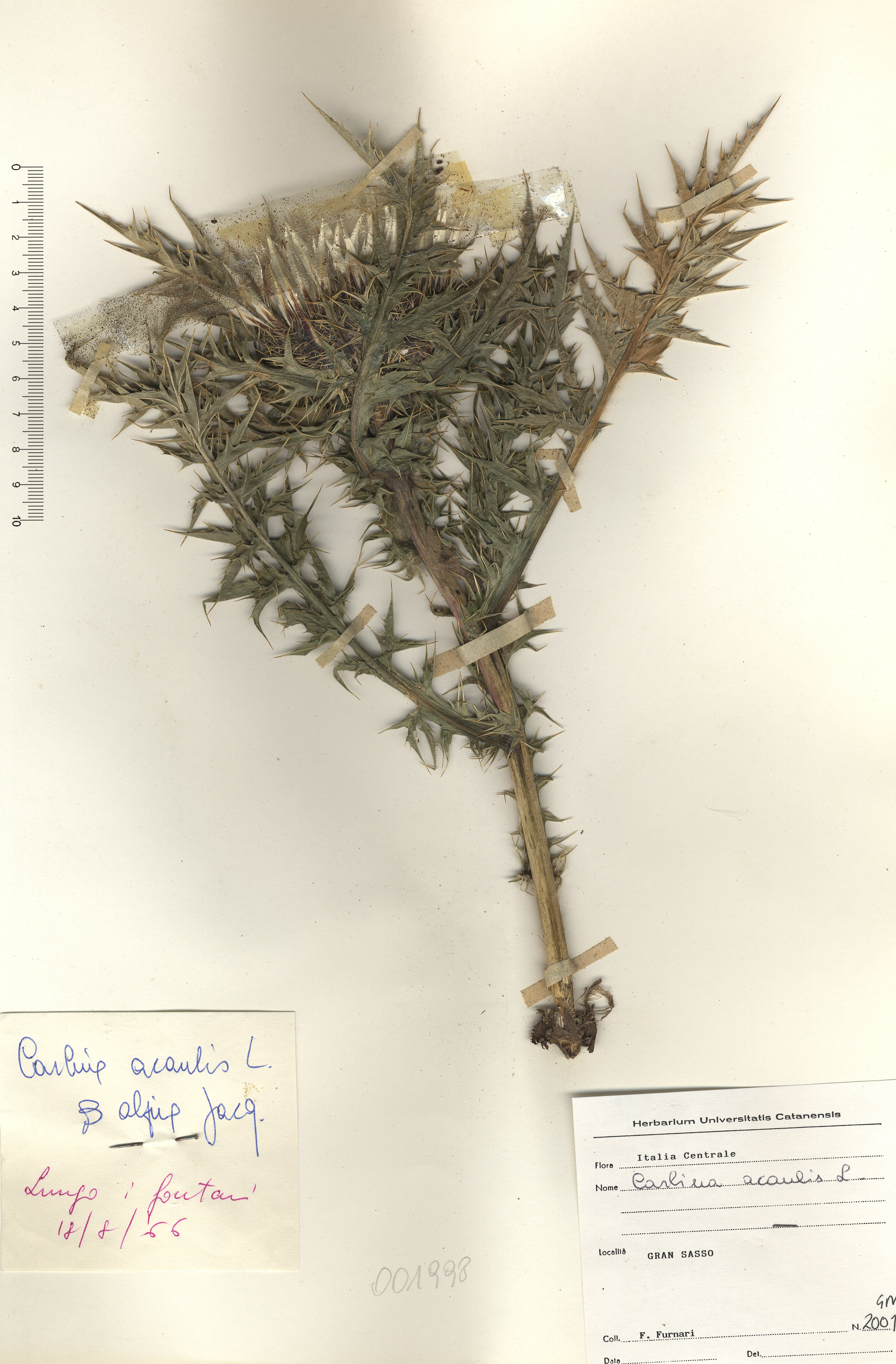© Hortus Botanicus Catinensis - Herb. sheet 001998<br>
