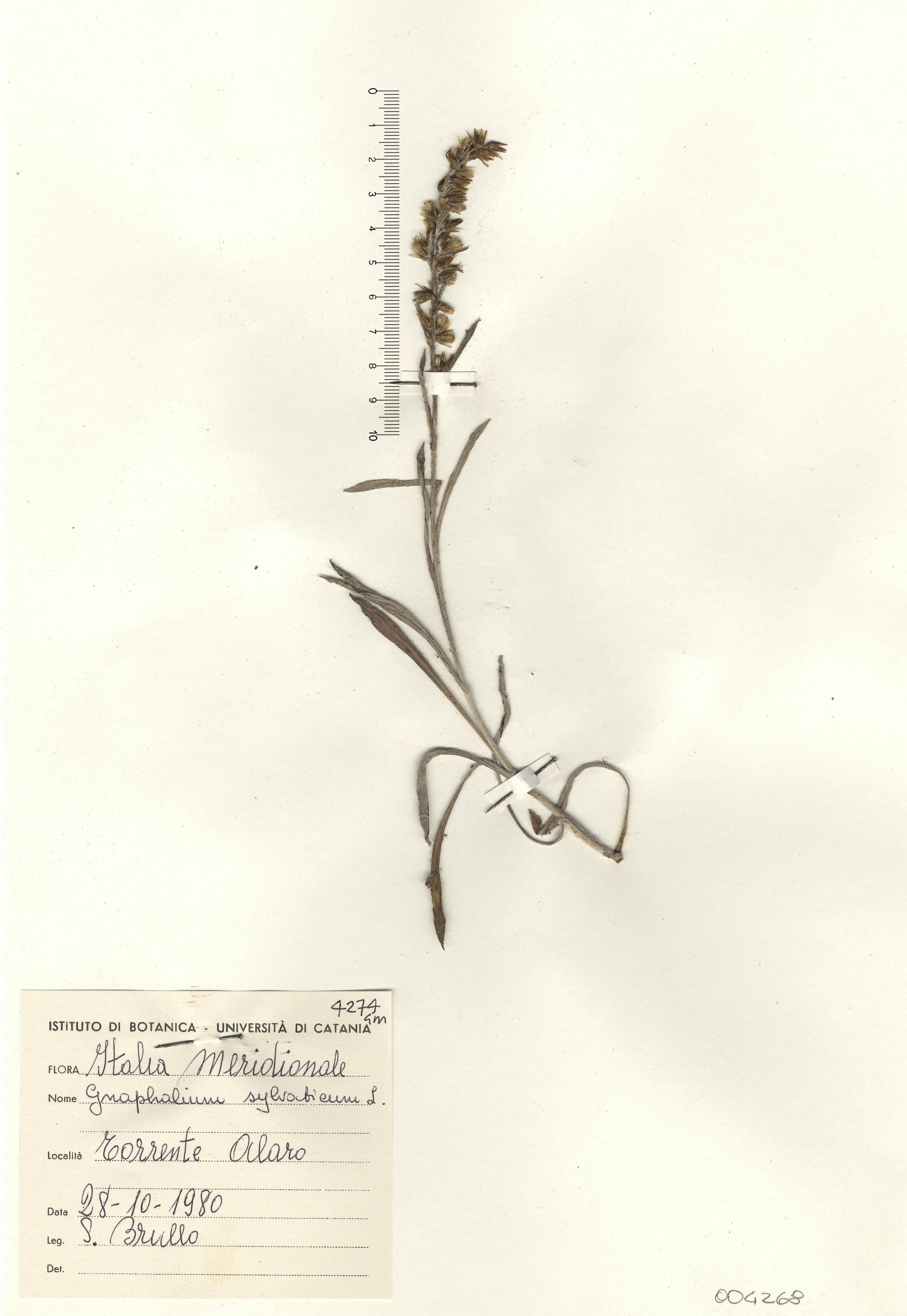 © Hortus Botanicus Catinensis - Herb. sheet 004268<br>
