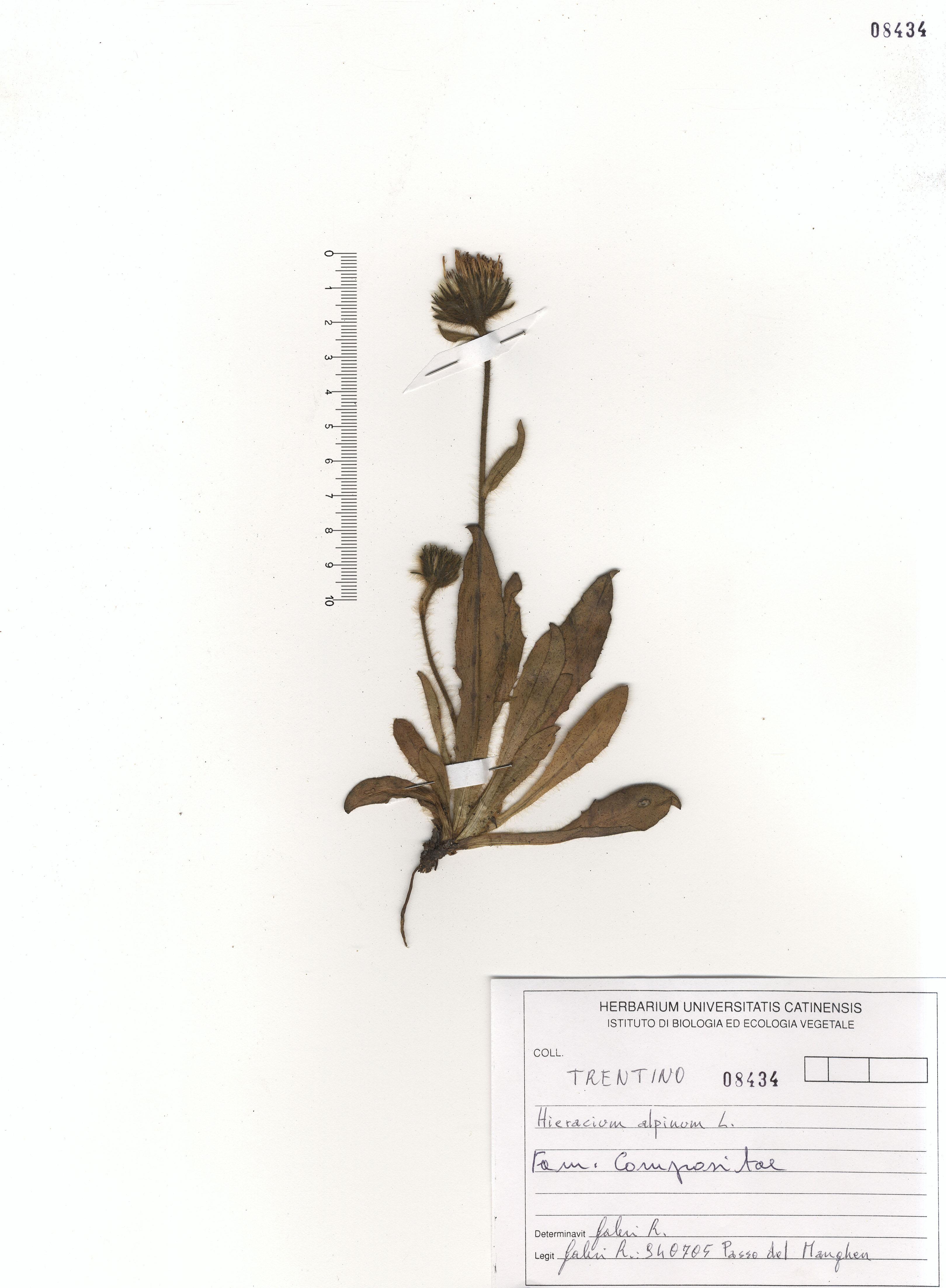 © Hortus Botanicus Catinensis - Herb. sheet 108434<br>