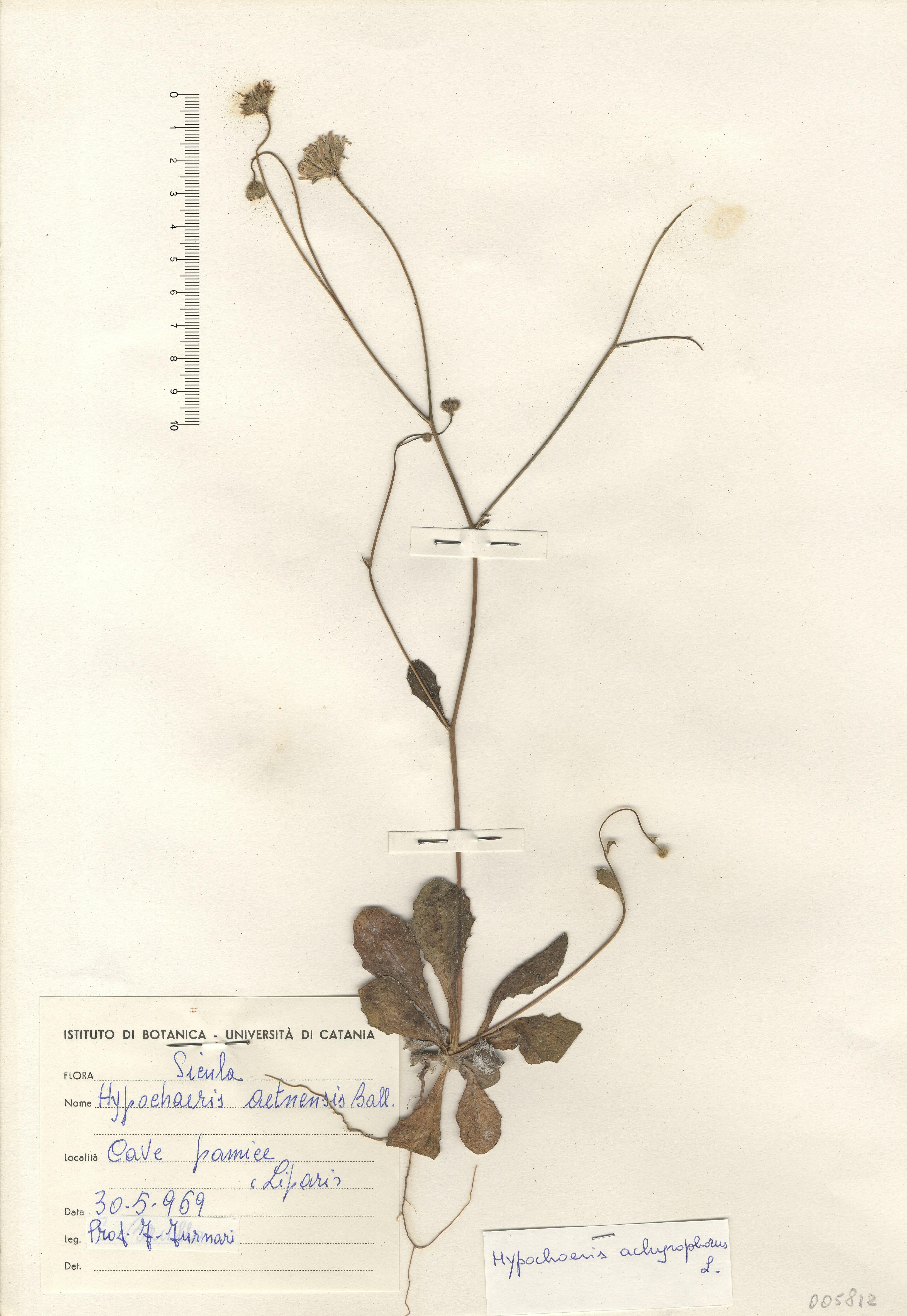 © Hortus Botanicus Catinensis - Herb. sheet 005812<br>