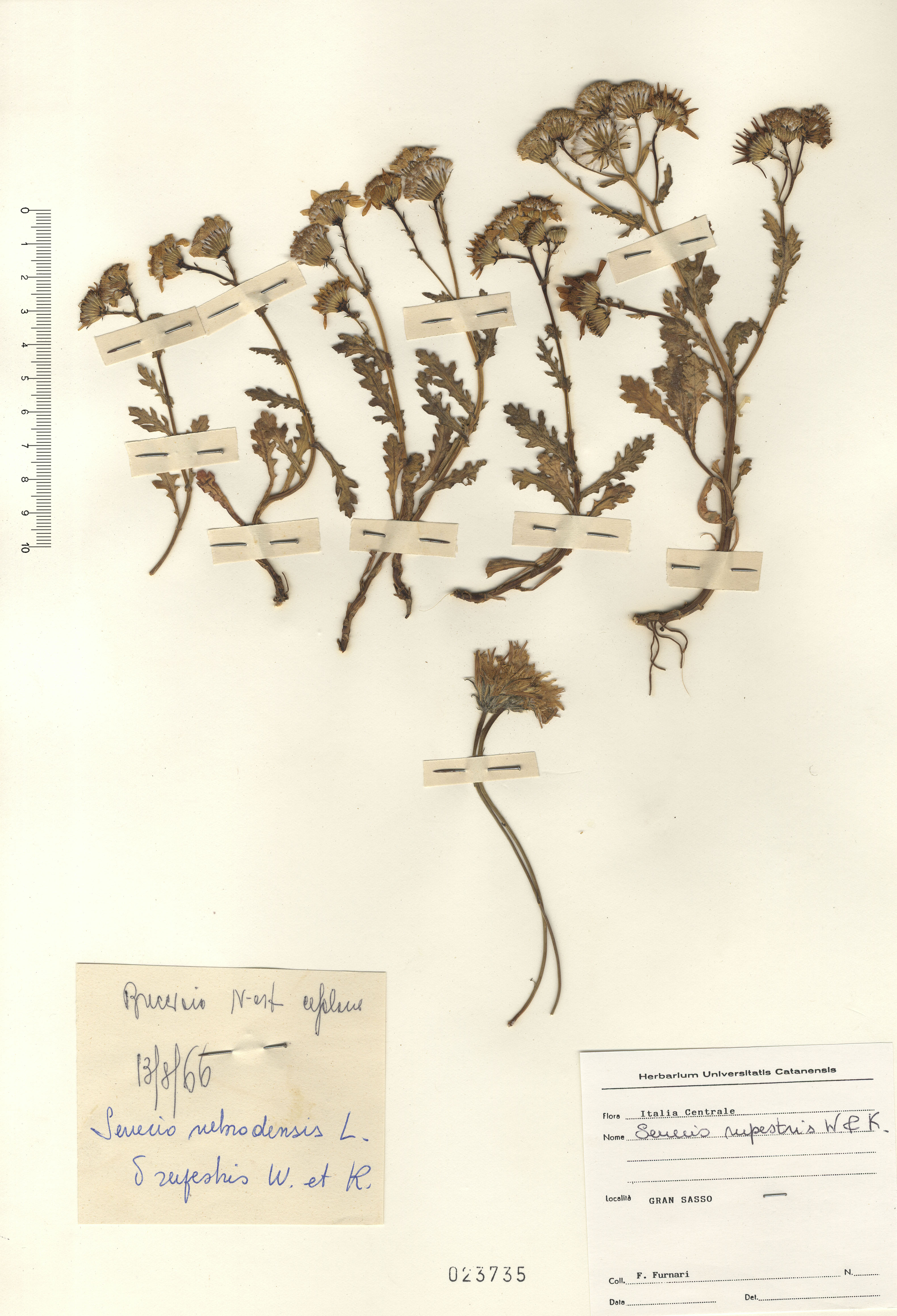 © Hortus Botanicus Catinensis - Herb. sheet 023735<br>