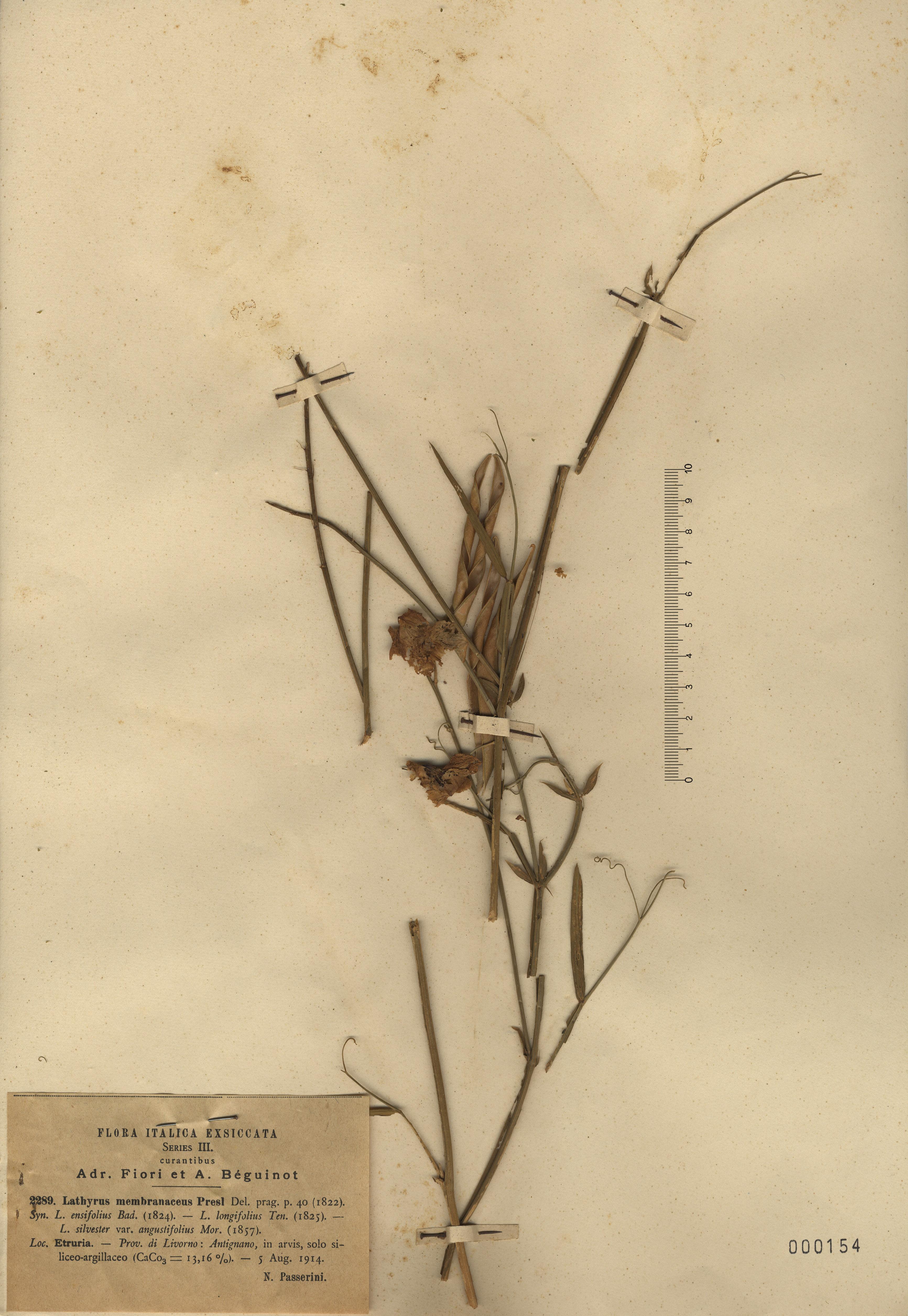 © Hortus Botanicus Catinensis - Herb. sheet  000154<br>
