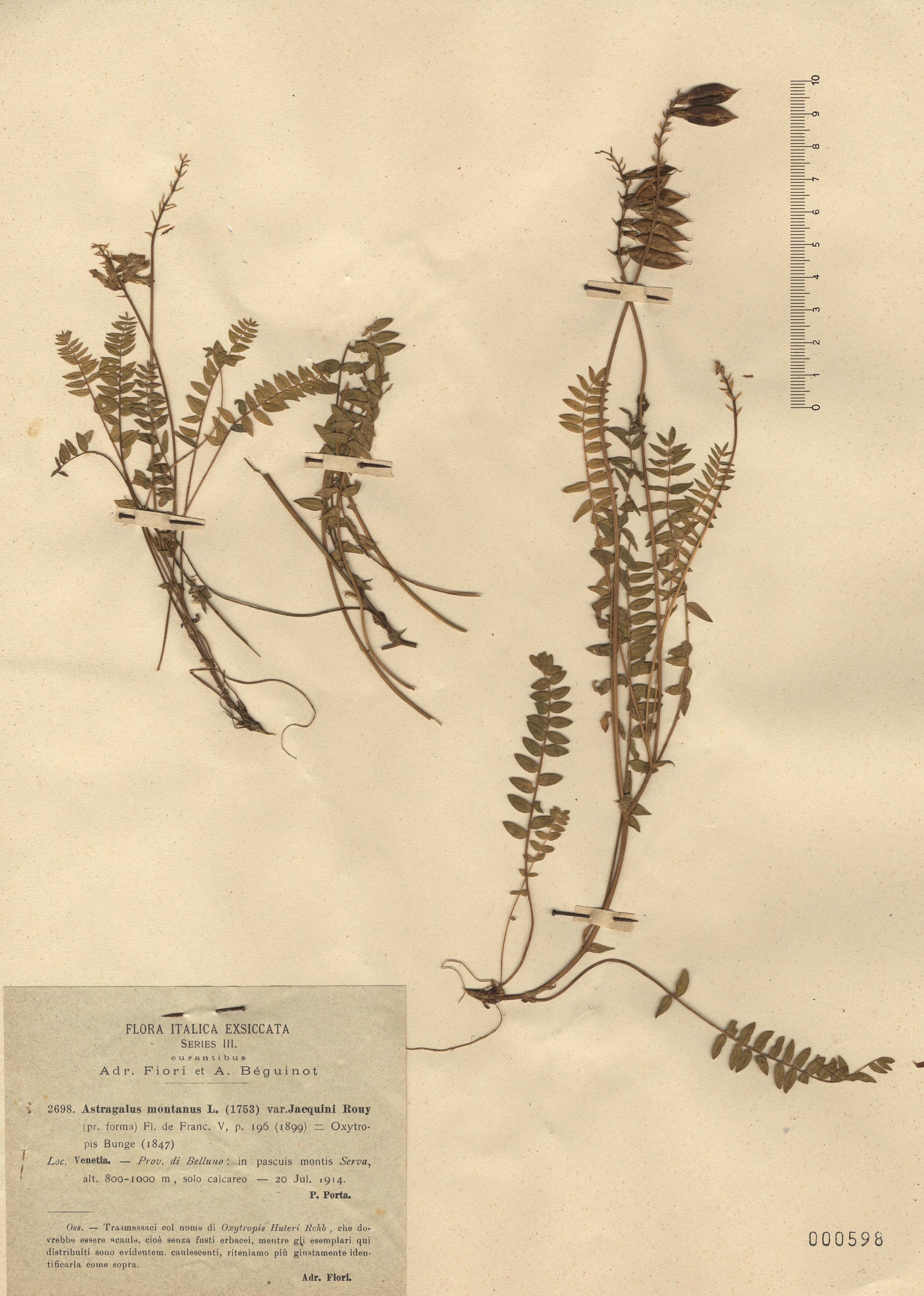 © Hortus Botanicus Catinensis - Herb. sheet  000598<br>