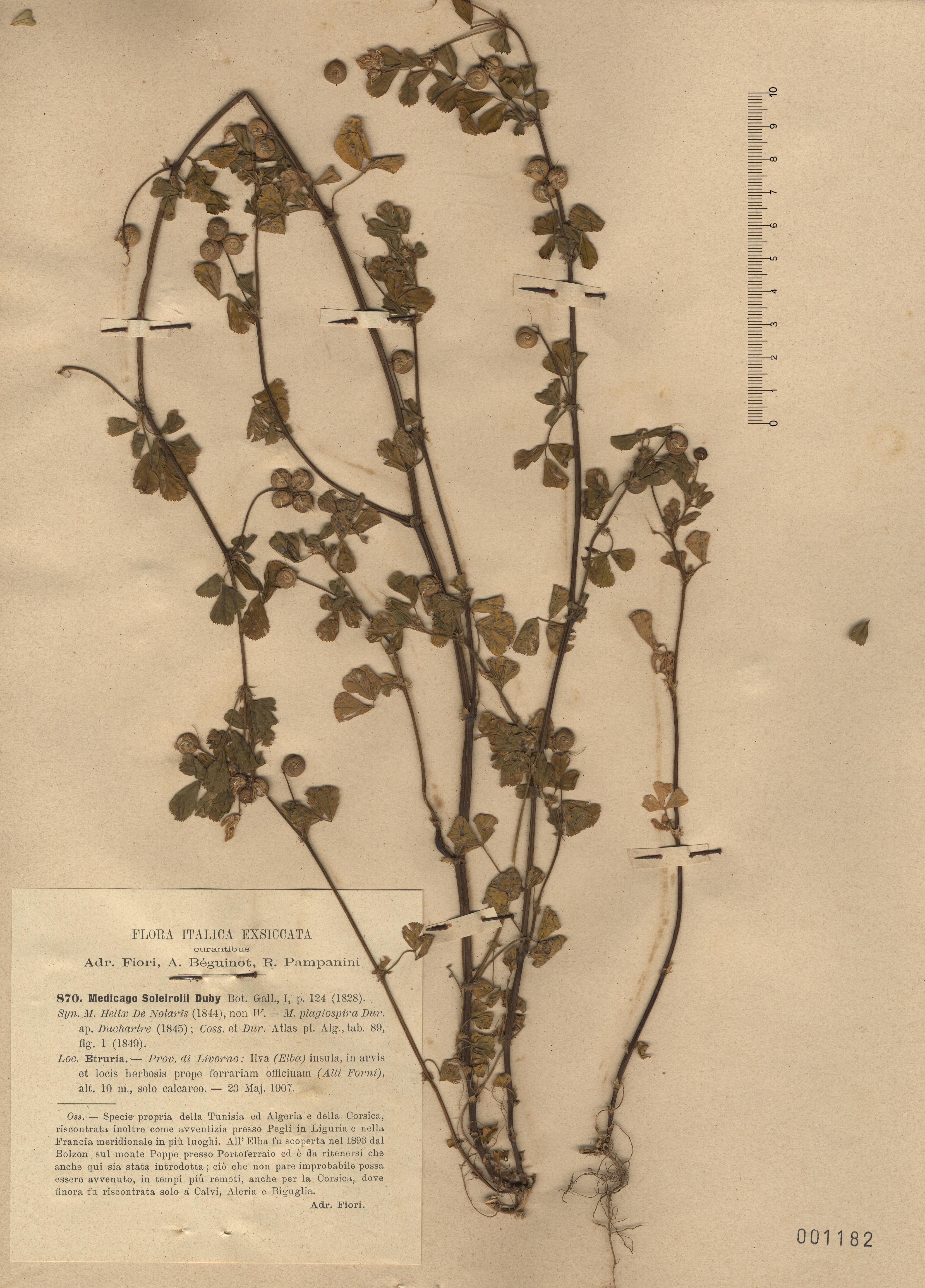 © Hortus Botanicus Catinensis - Herb. sheet  001182<br>